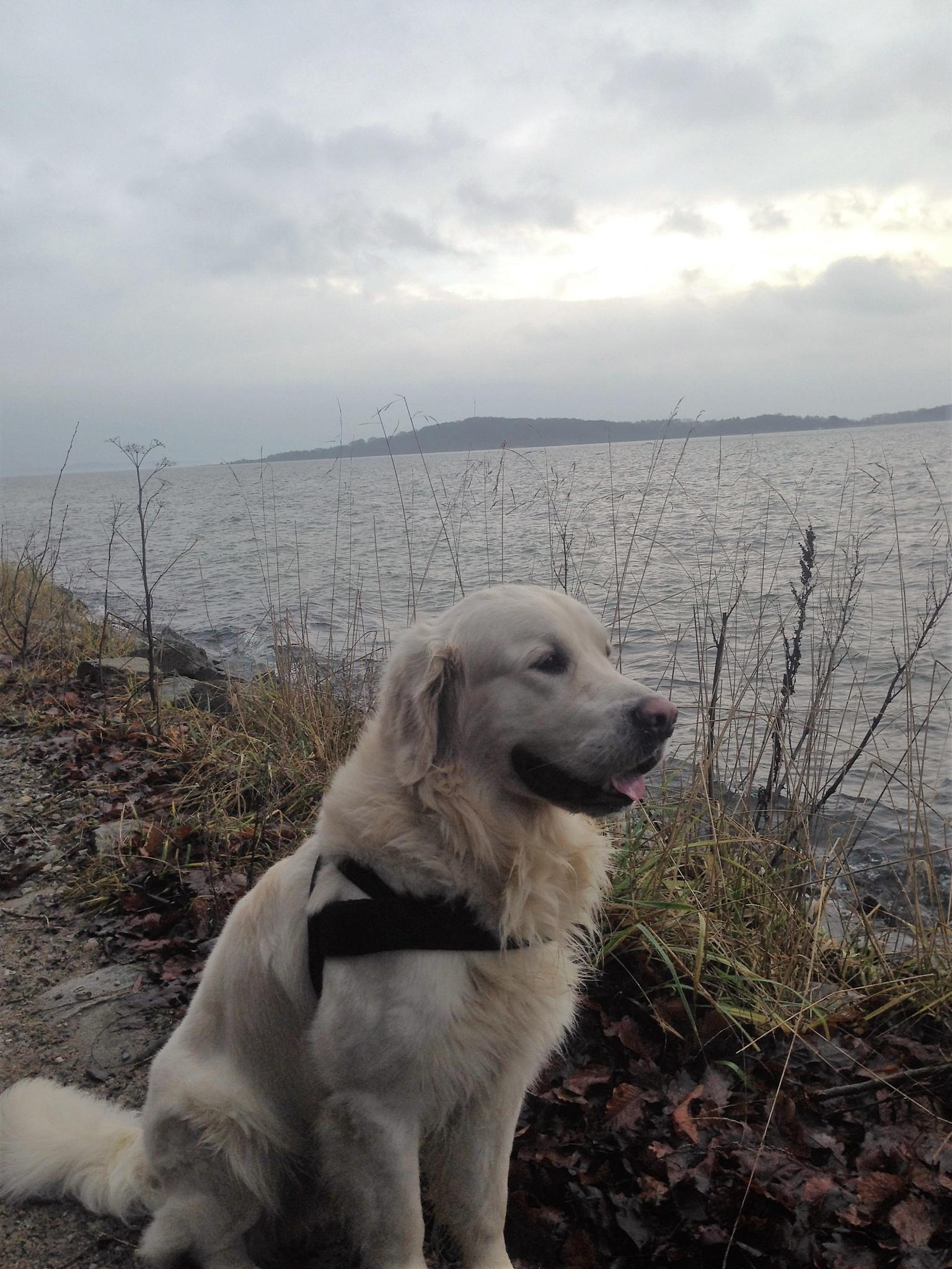 happy dog 12 by thwdrehbuch