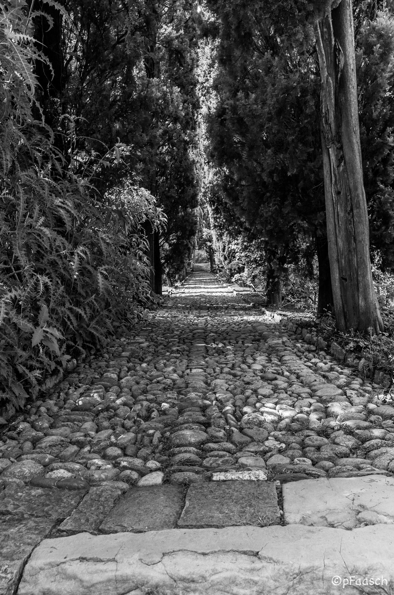 path by Peter F