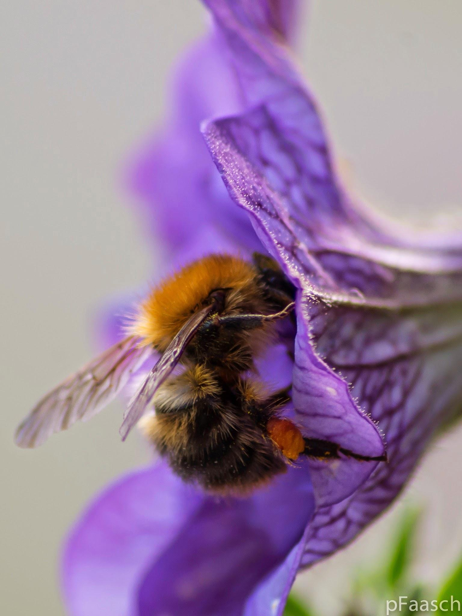 bee by Peter F