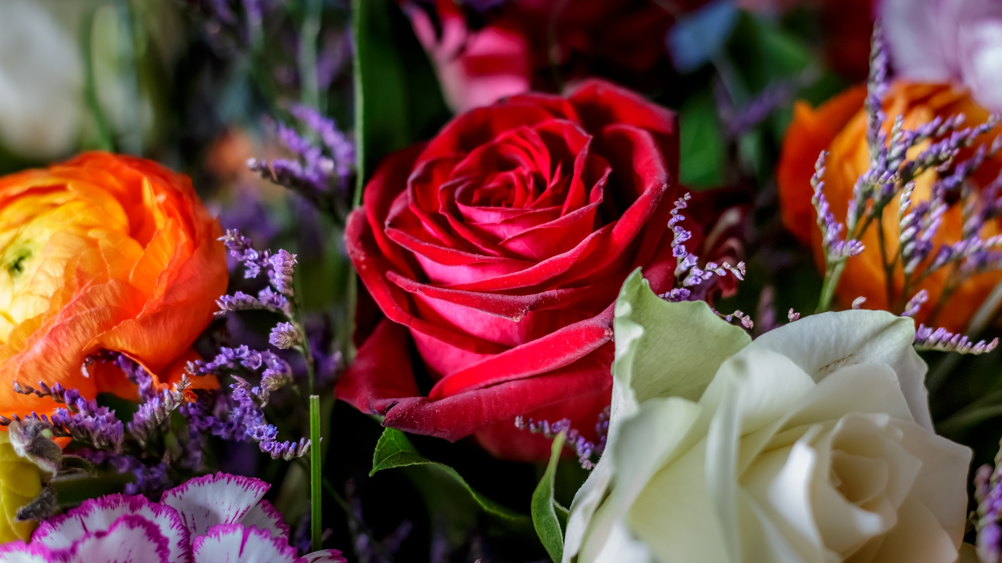 roses by matthewlawes123
