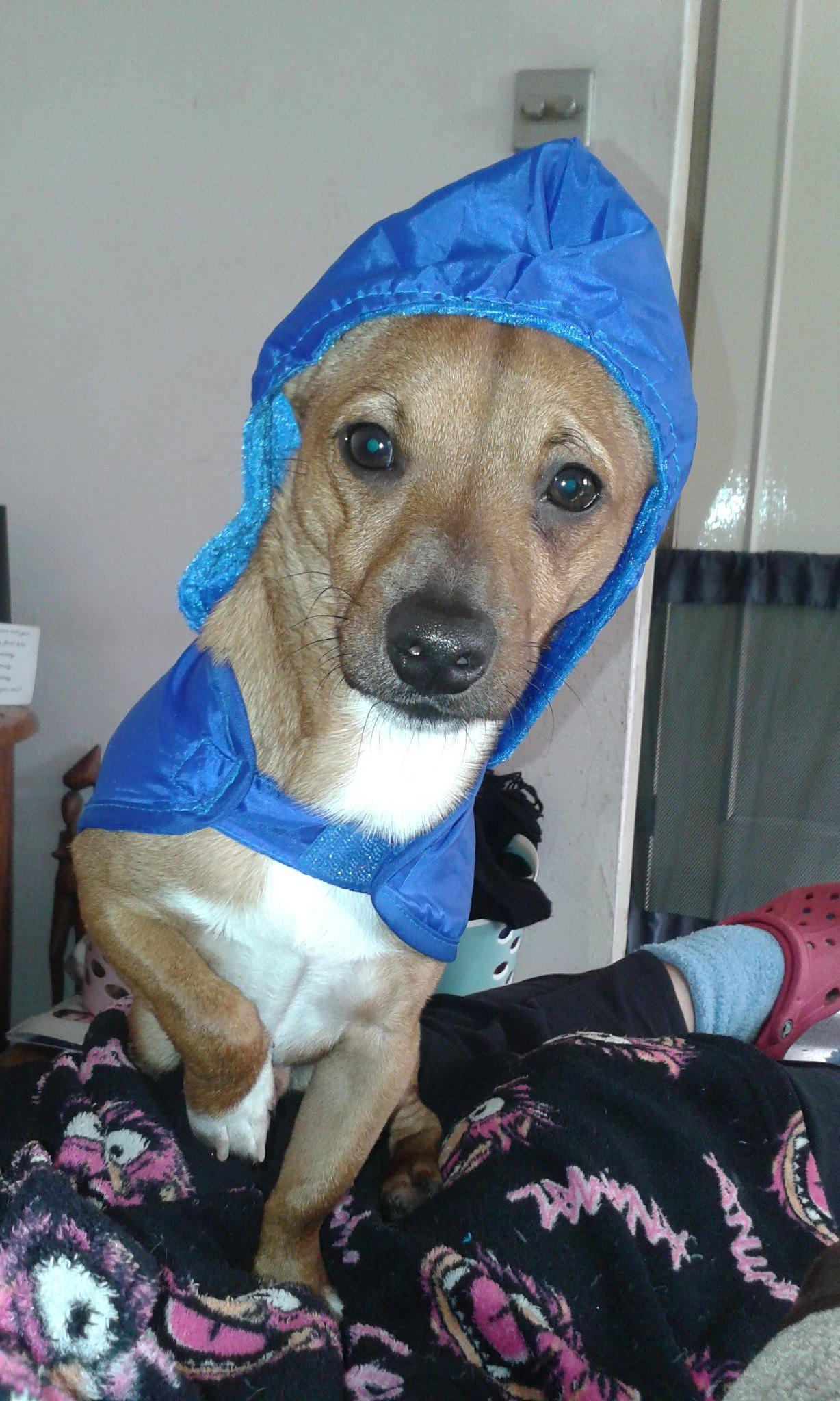 Ozzy's new raincoat :) by Kirstin Walden Crockford