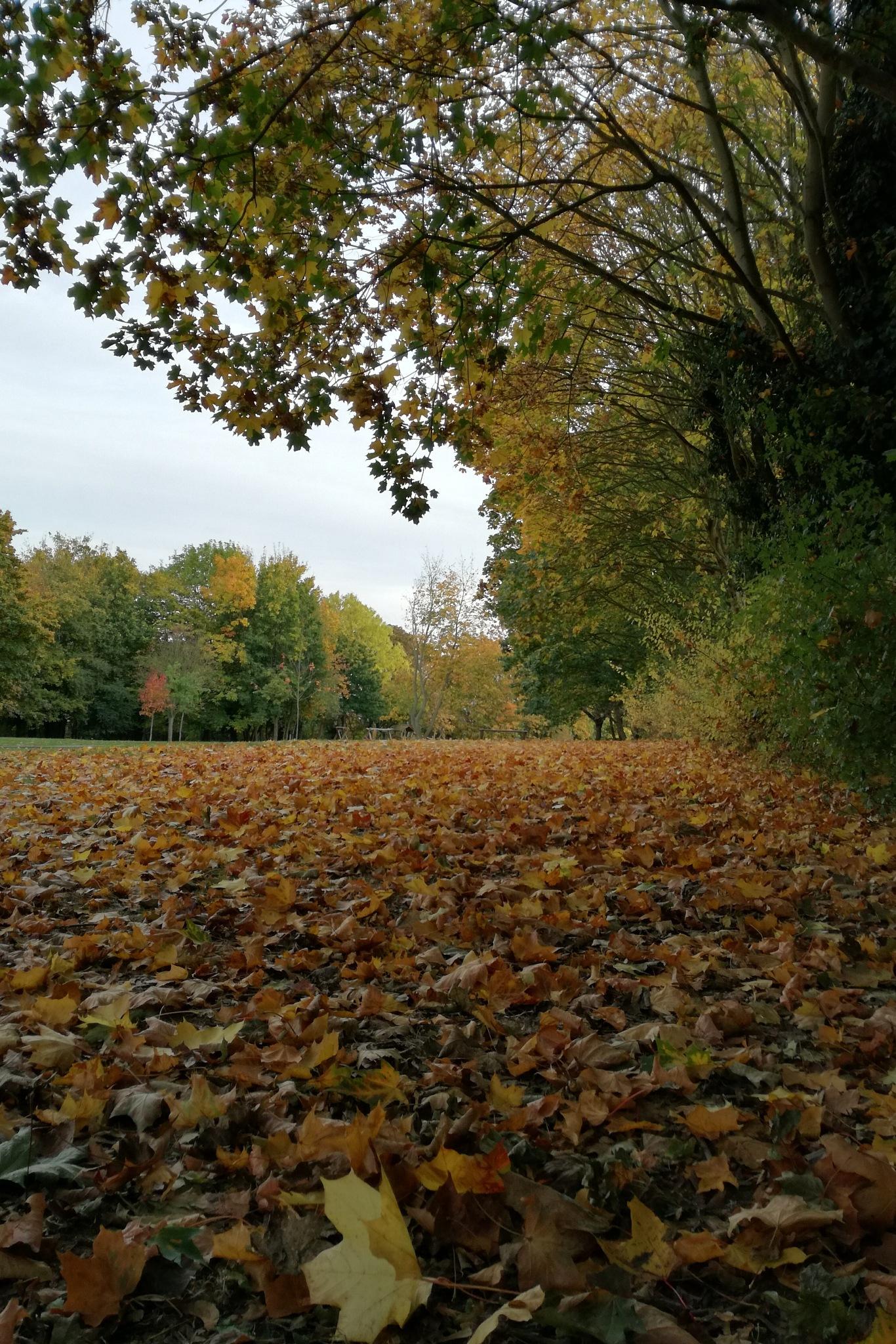 Autumn leaves. by Kirstin Walden Crockford