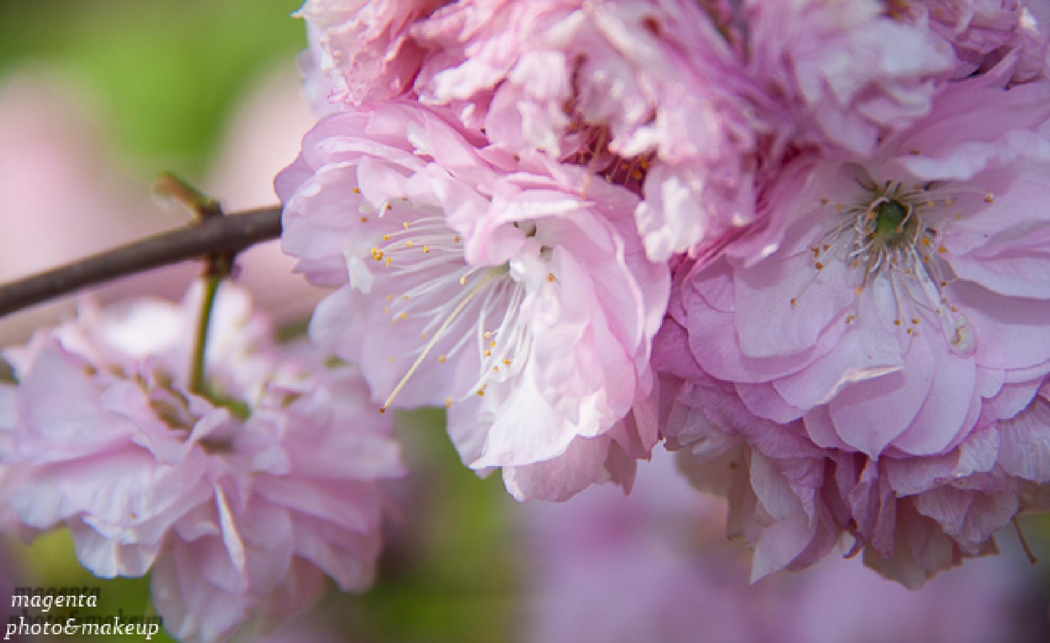 Spring by Kata Bartha