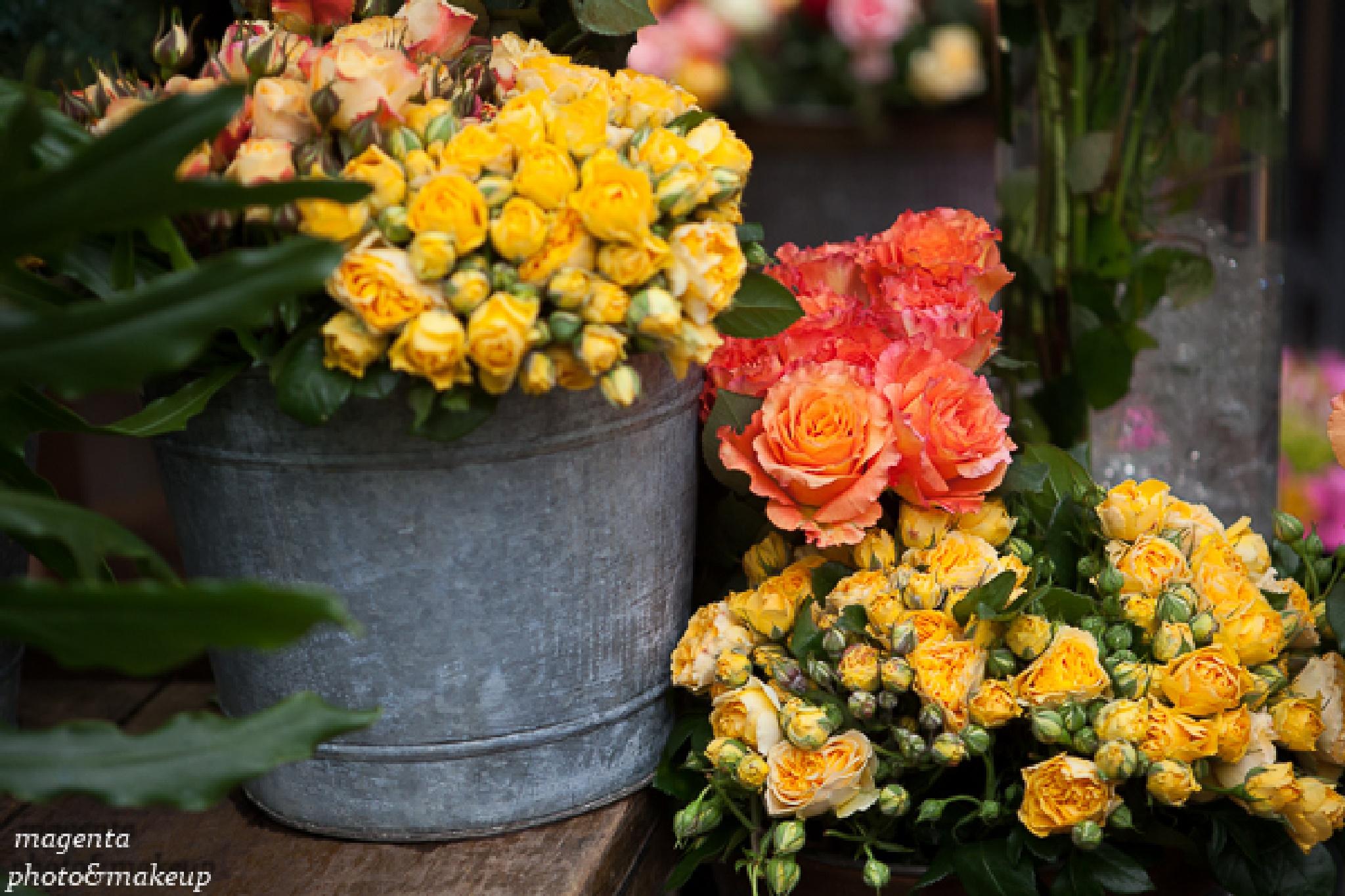 Roses in Paris by Kata Bartha