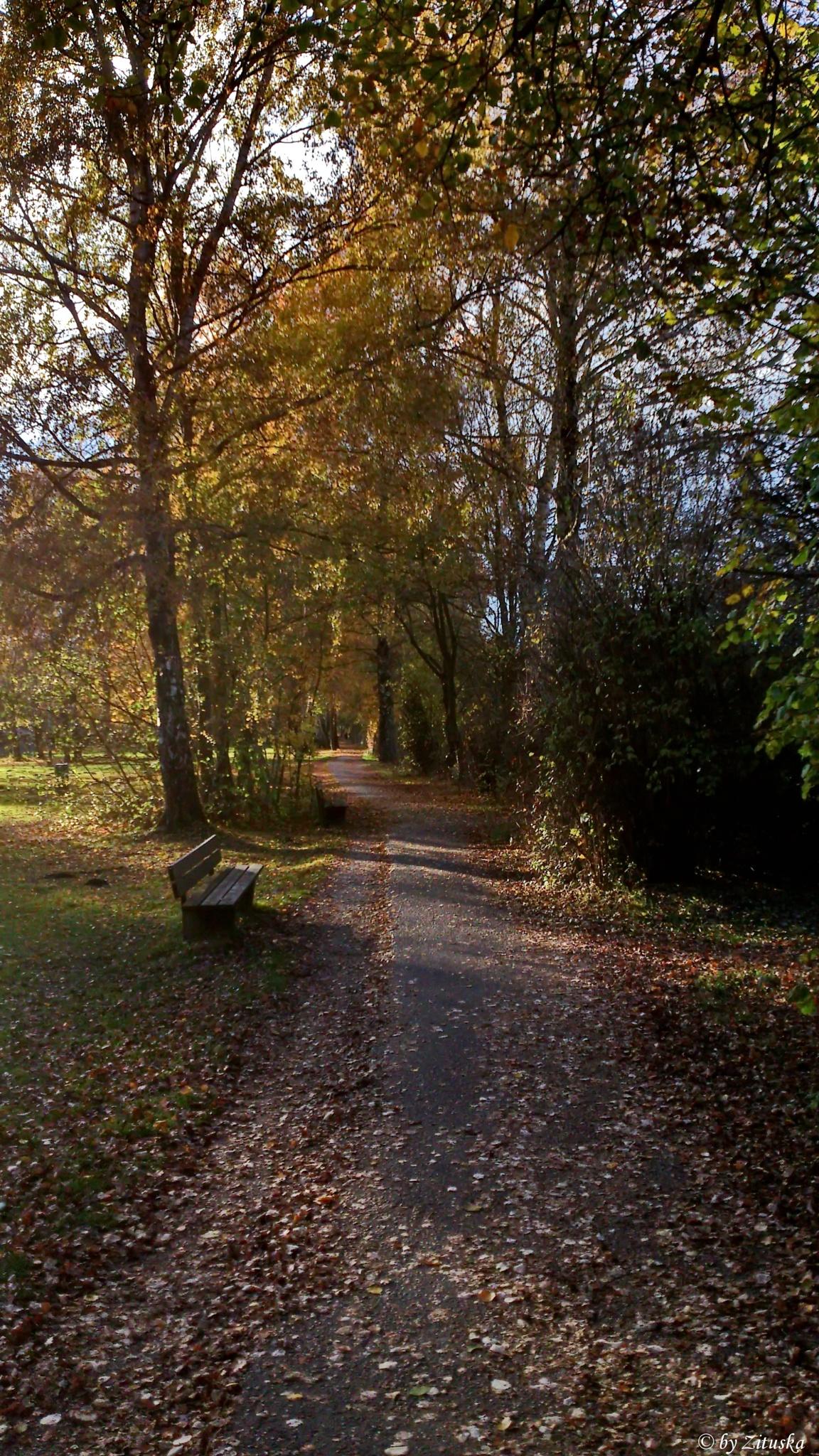 In park  by Zituska
