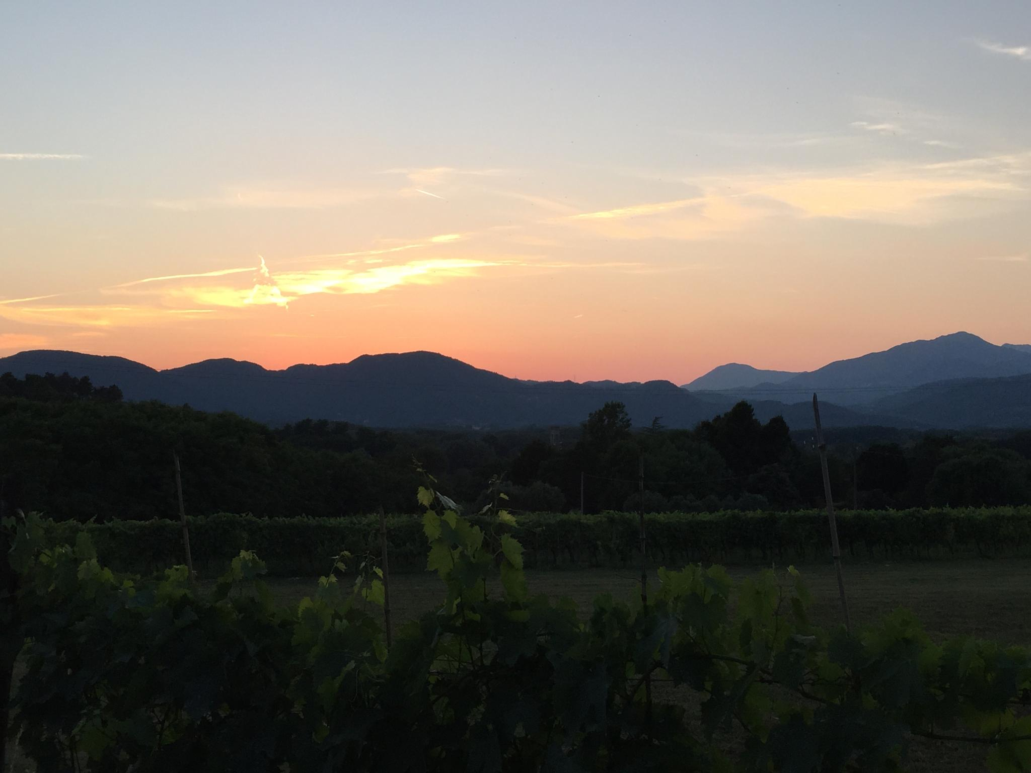 Sunset Mountains Grapevines Lucca by Emma