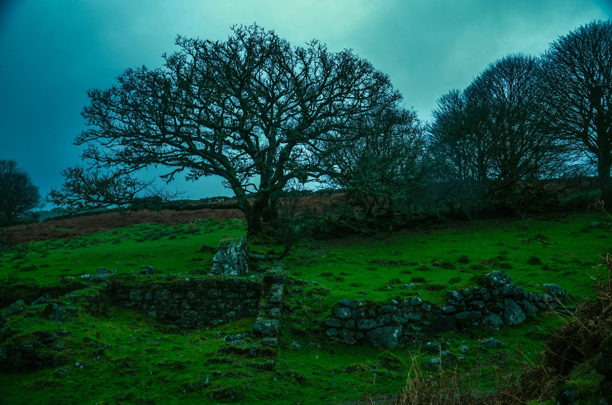 Winter on Dartmoor by johncedriccoles123