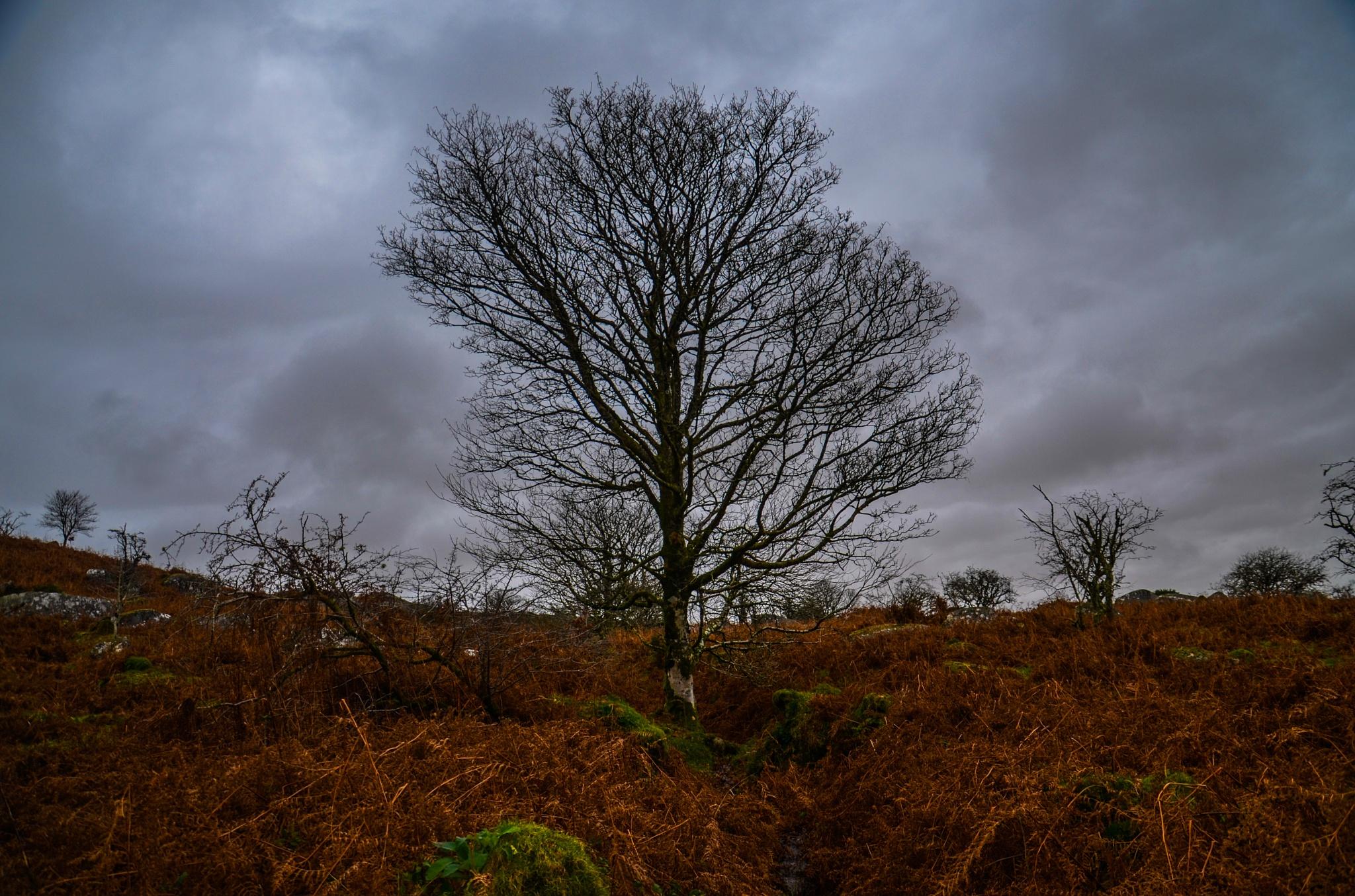 Dartmoor in the rain by johncedriccoles123