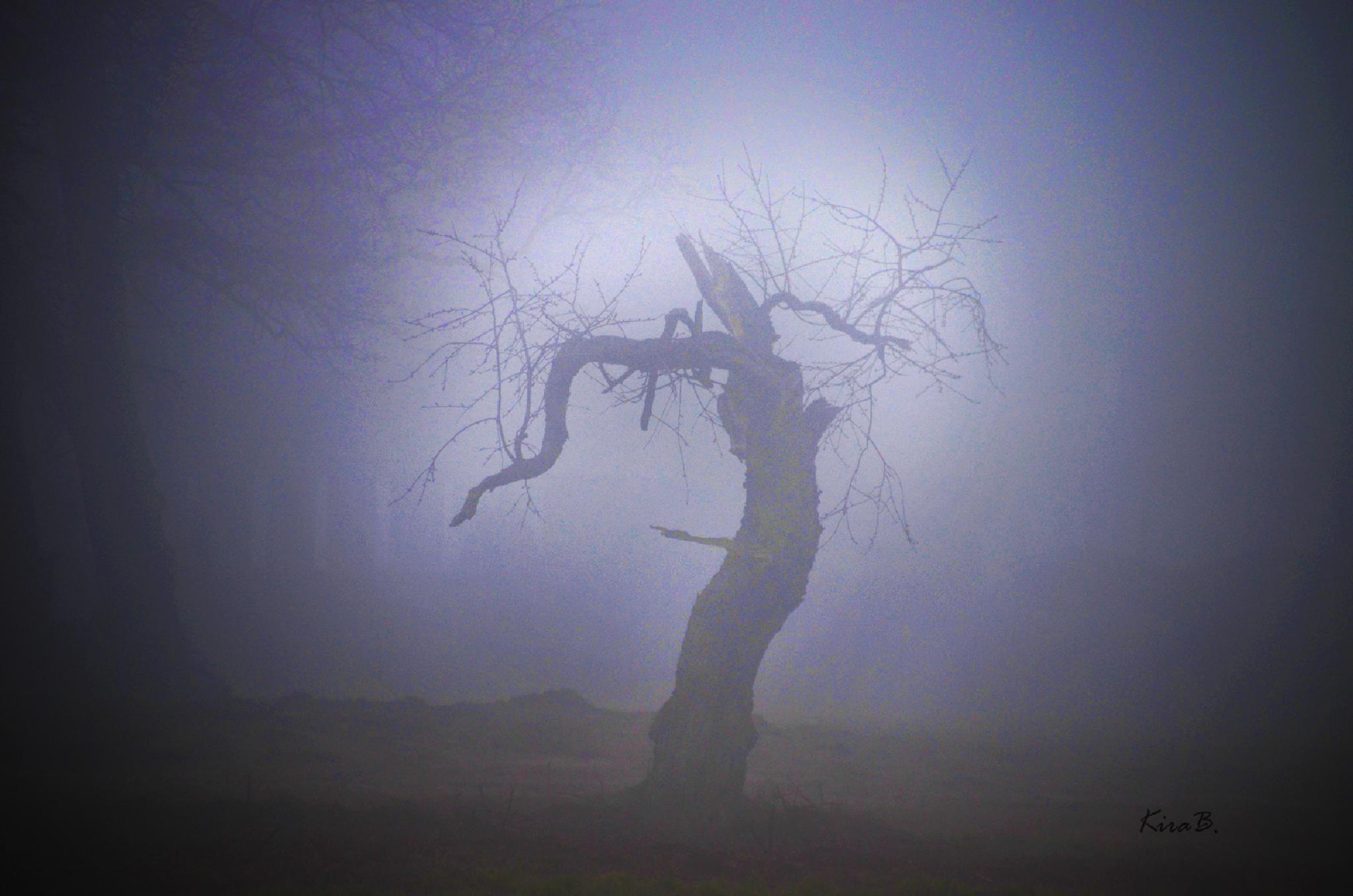 foggy morning by kirabruns