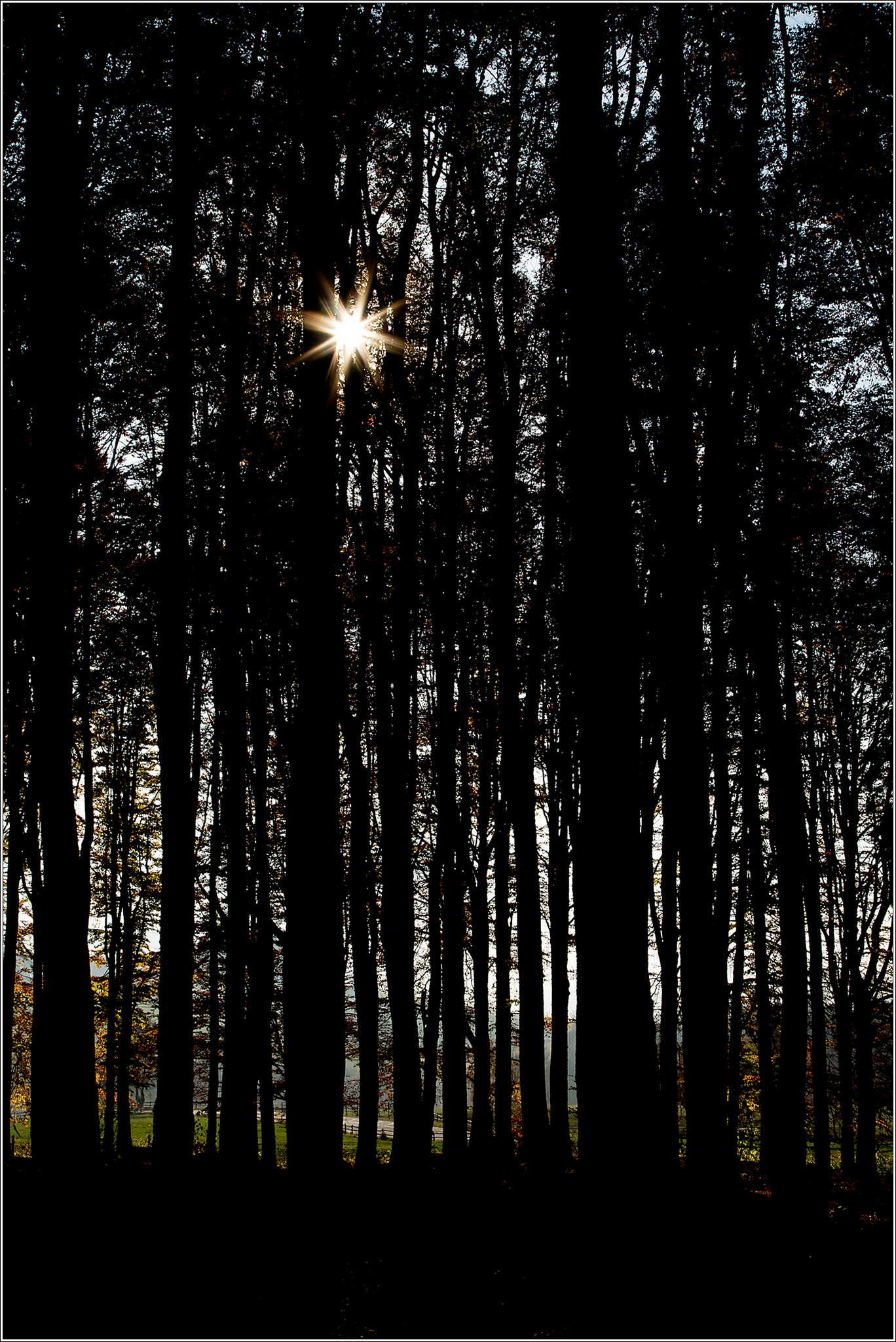 The sun behind the trees by Diego Turel