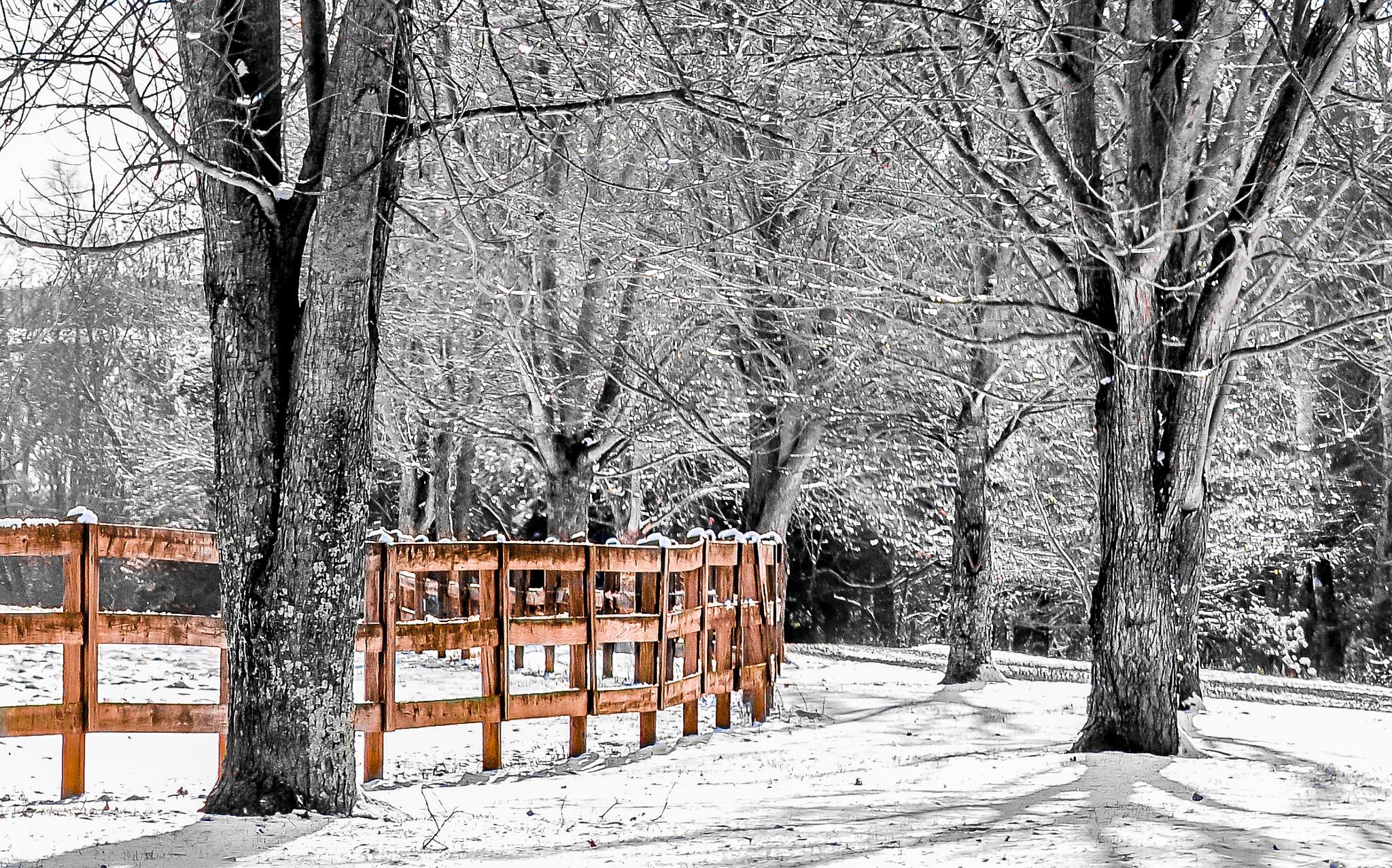 the fence by photojam2014