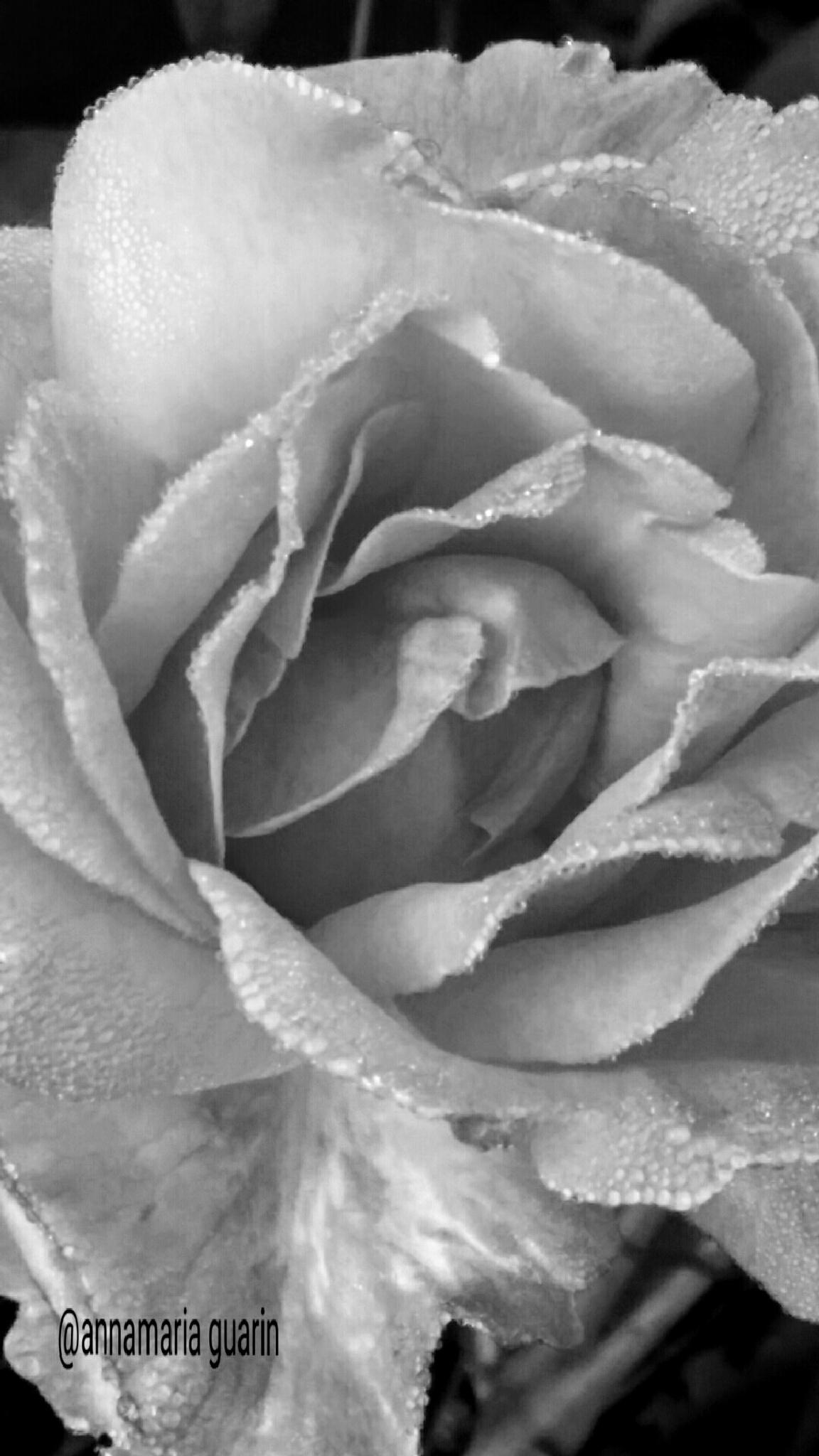 Passione...amore by annamariaguari