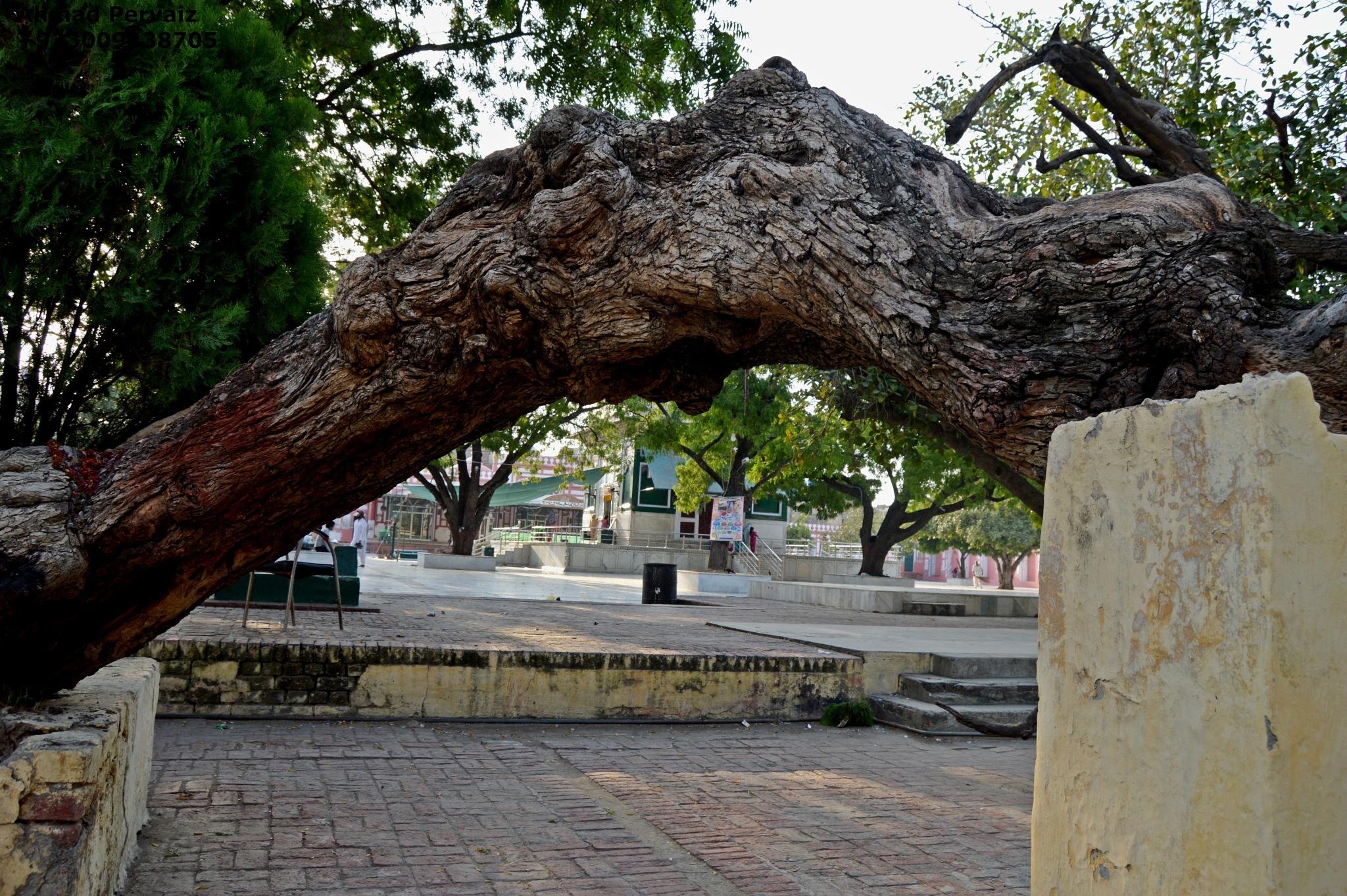 Tree 1 by pervaiz_jiu-jitsu