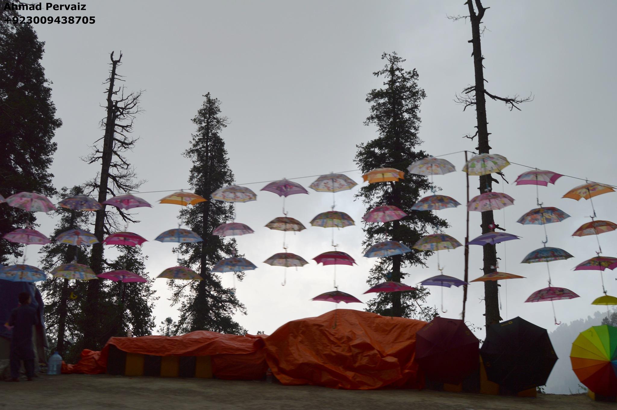 Umbrellas by pervaiz_jiu-jitsu
