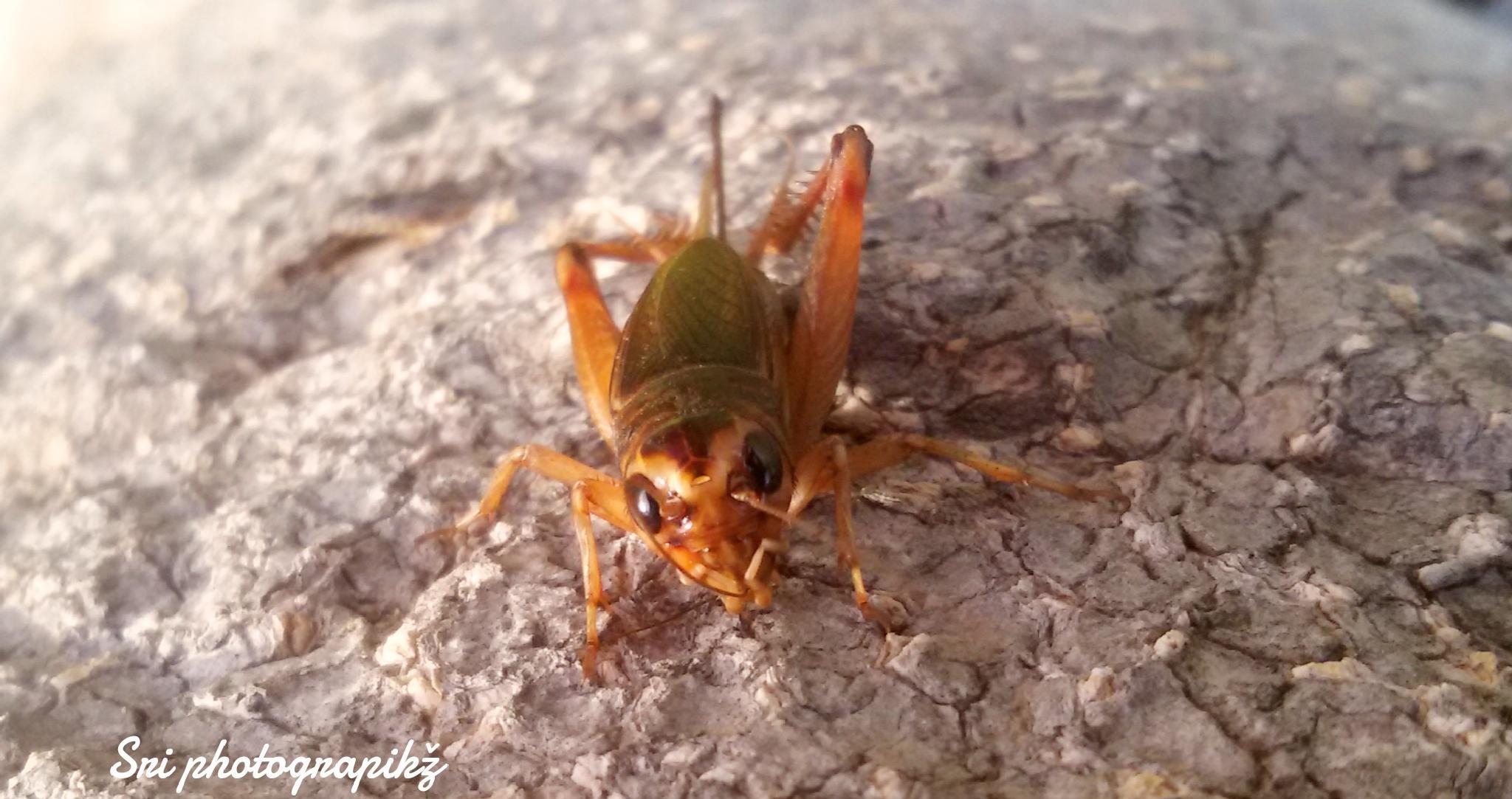 Cricket by Jawahar srinath