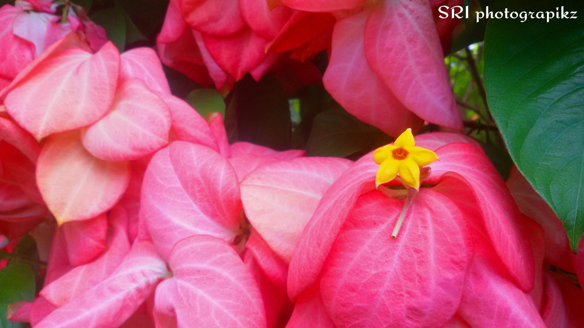Flower by Jawahar srinath
