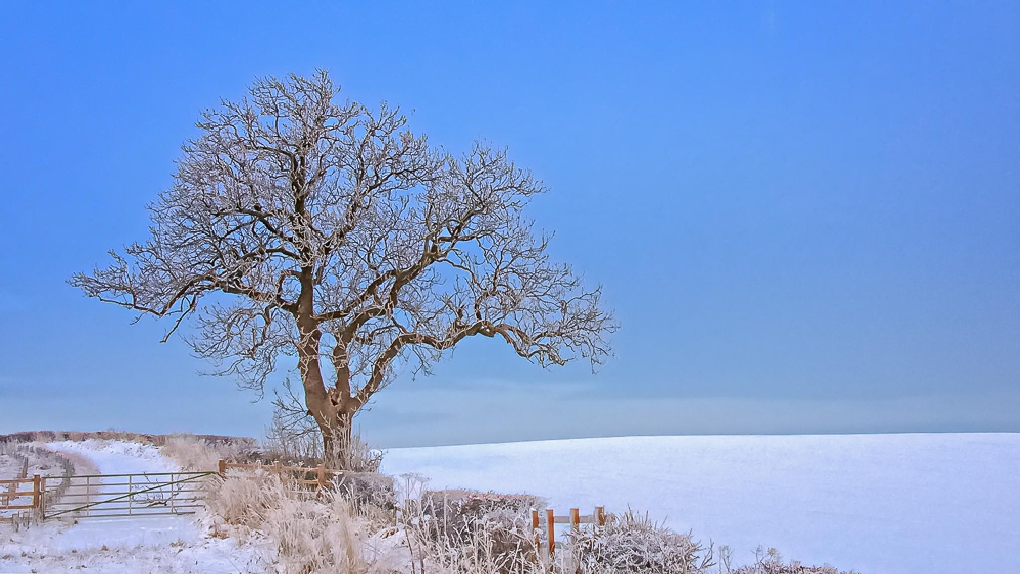 Winter Scenery - County Durham UK by Chris Bailey