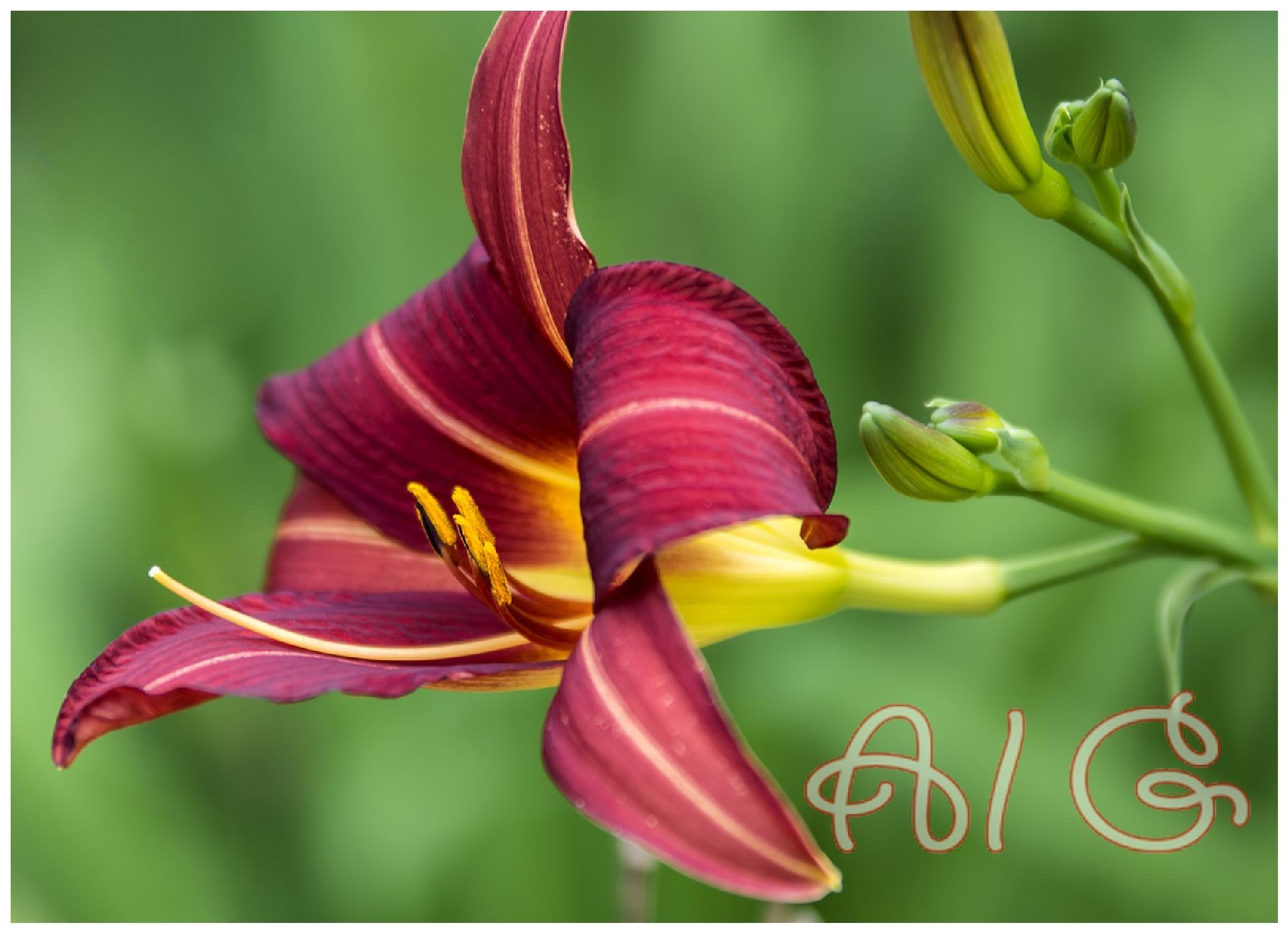 Beauty by AlanG