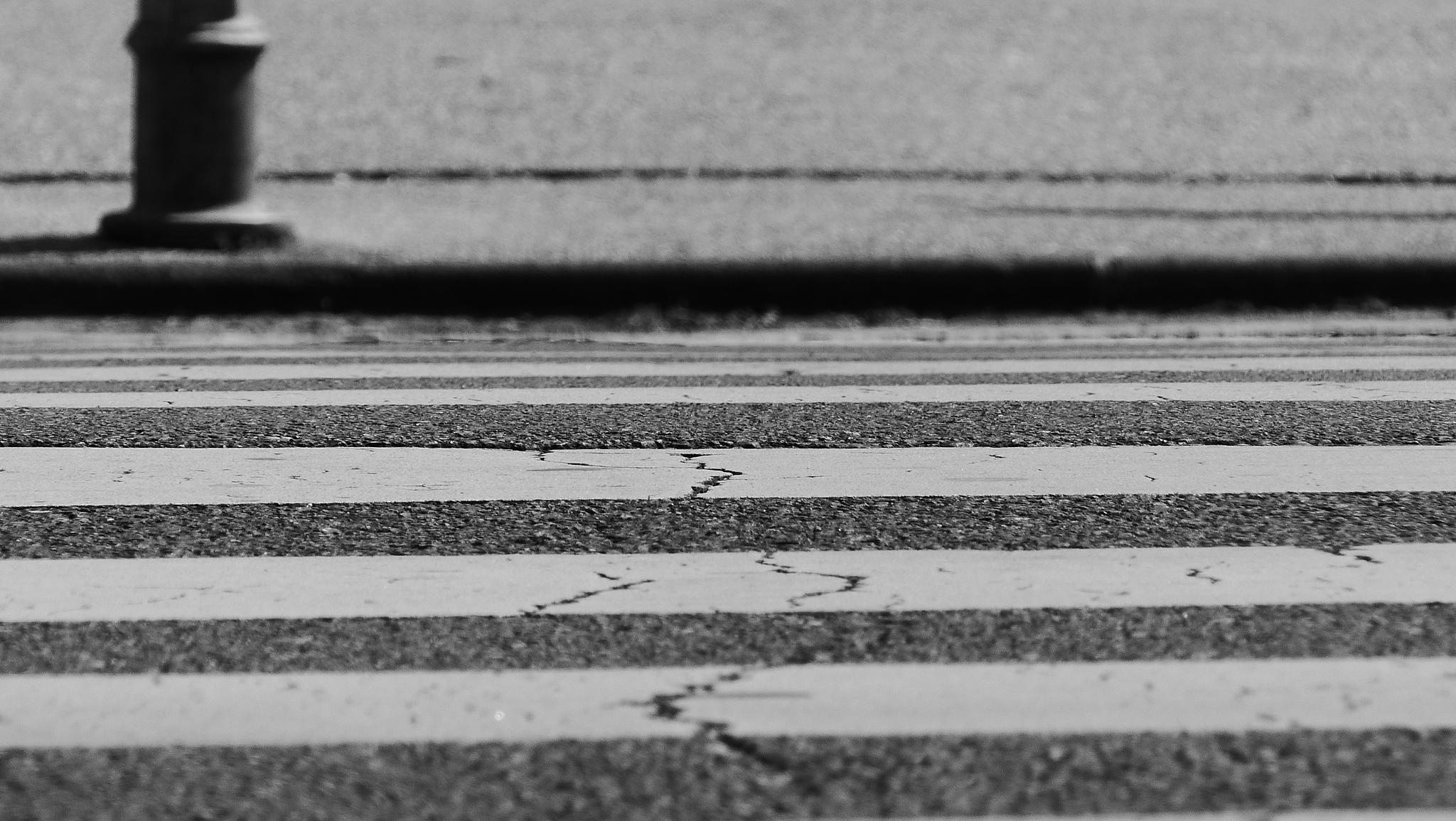 street zebra by TomislavBosanac