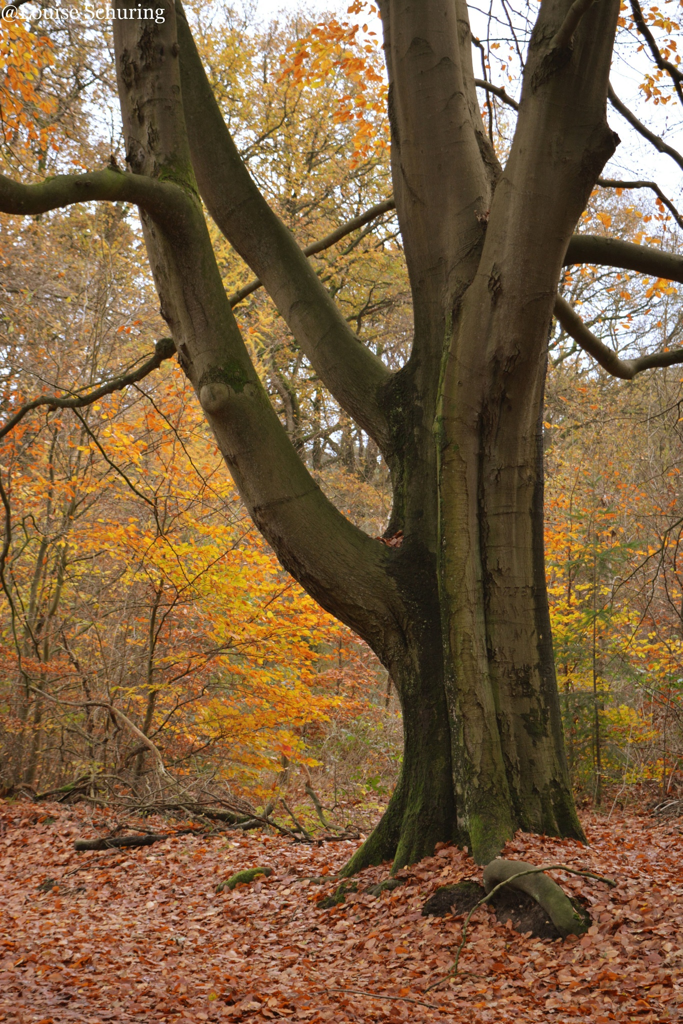 Autumn I by Louise Schuring