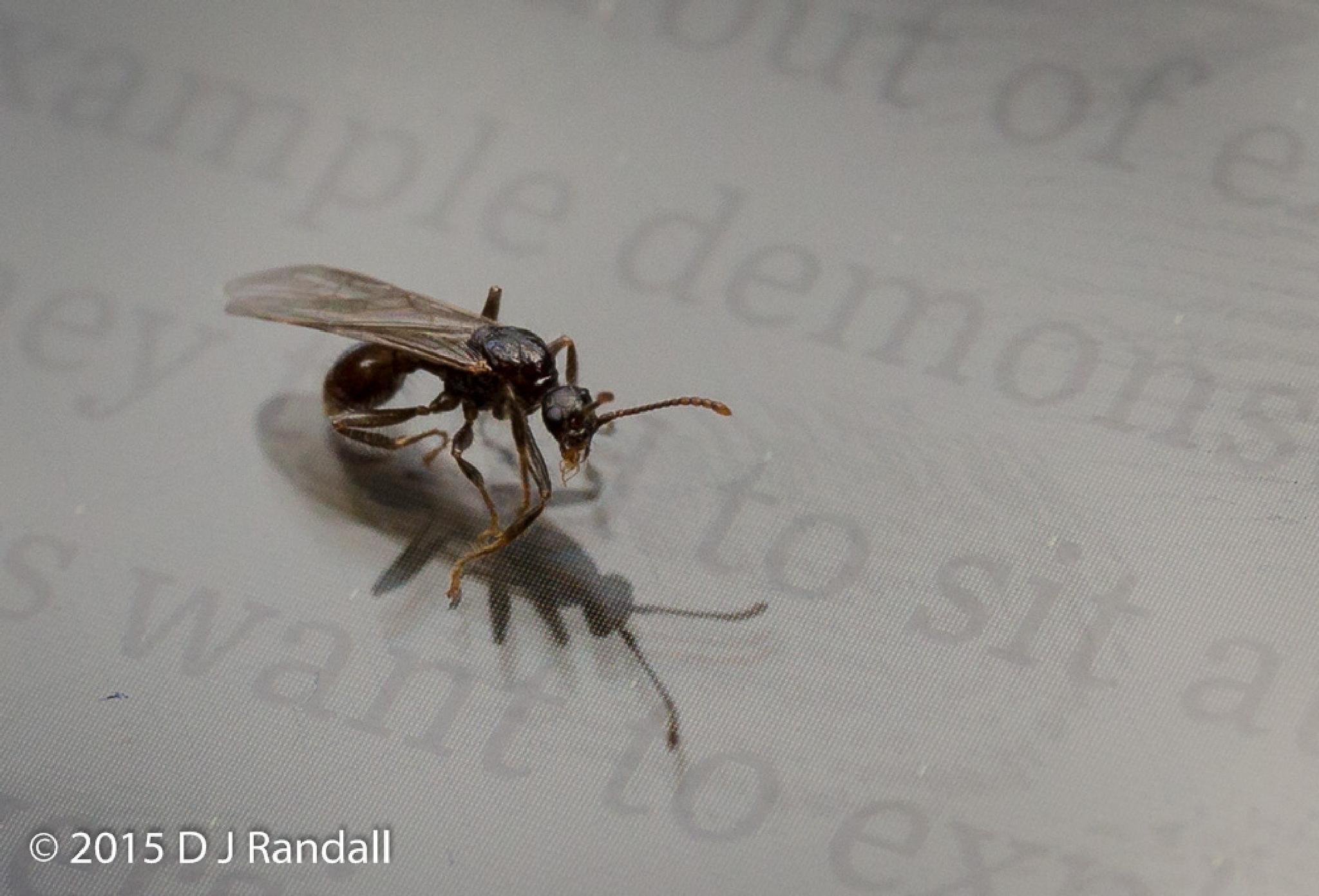 Ant reading physics by Albatroff