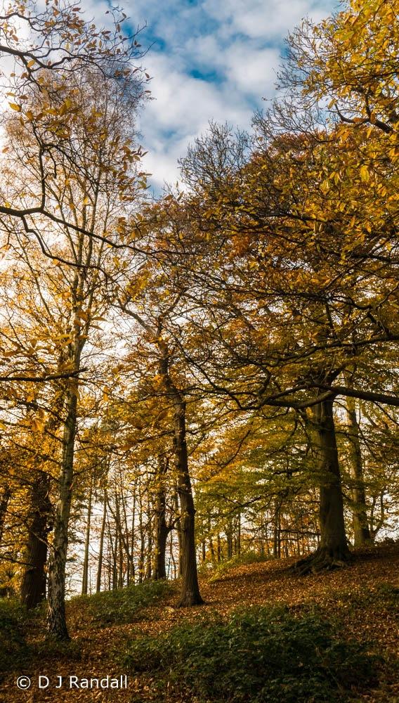 Autumn in the beechwood by Albatroff