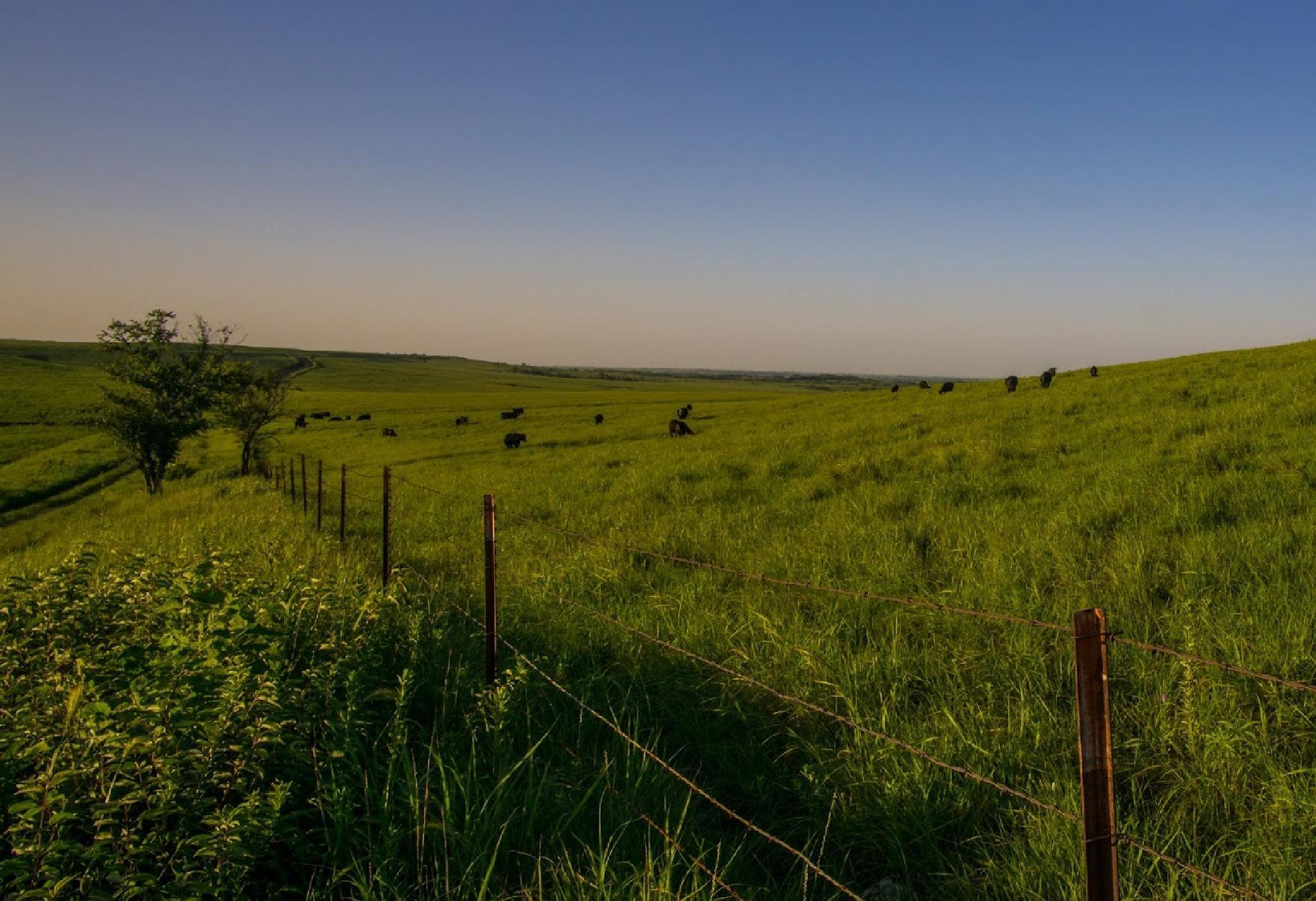 Photo in Landscape #cattle #grass #hills #kansas