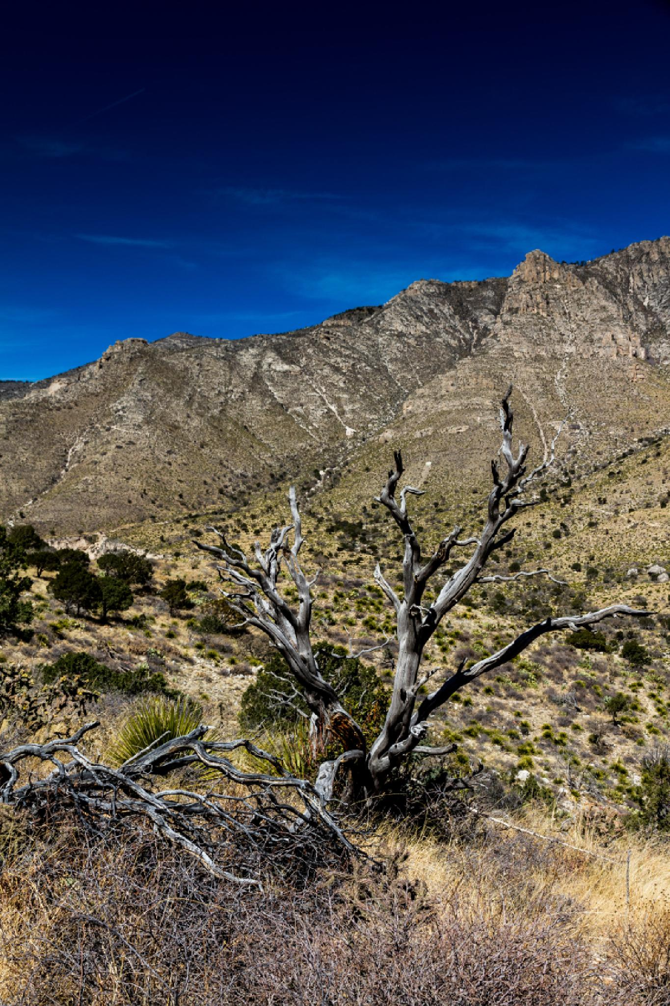Photo in Landscape #guadeloupemountains #guadeloupe #mountains #texas