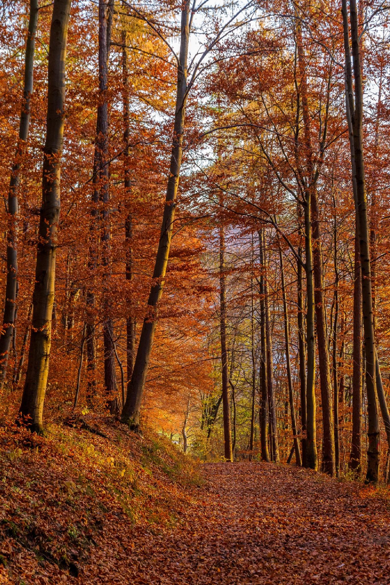 Autumn by FSFoto