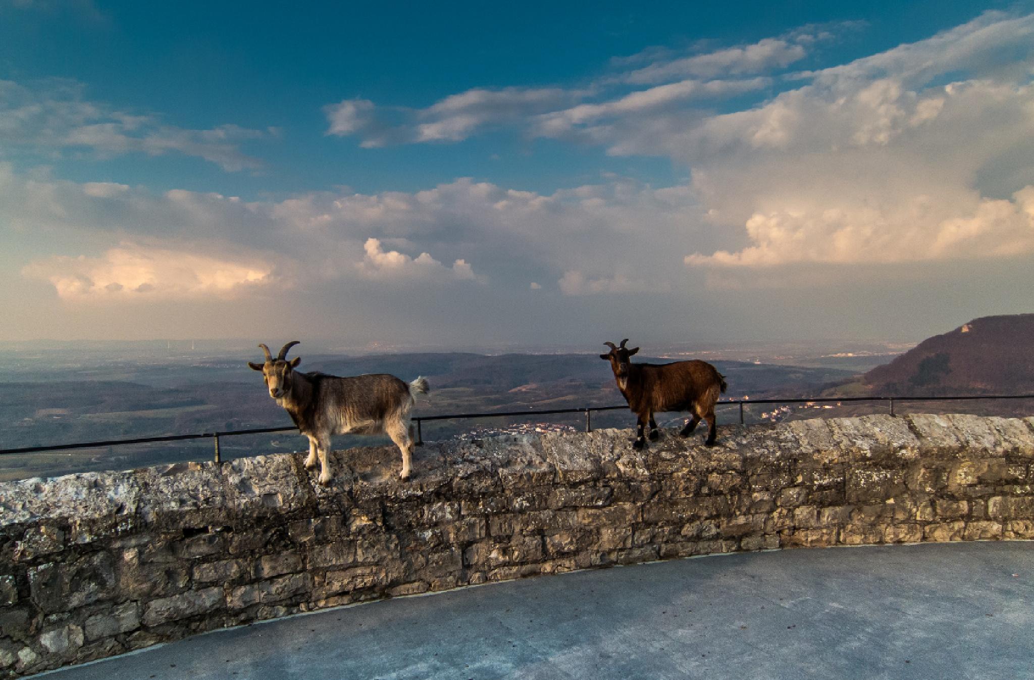 Enjoy the view... by FSFoto