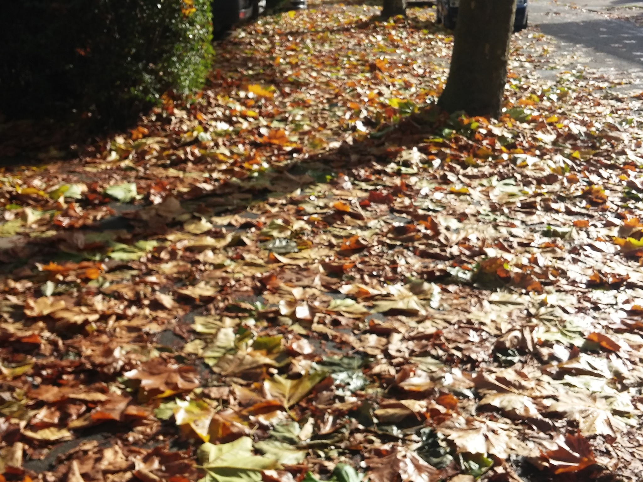 Carpet of leafs by Abbie