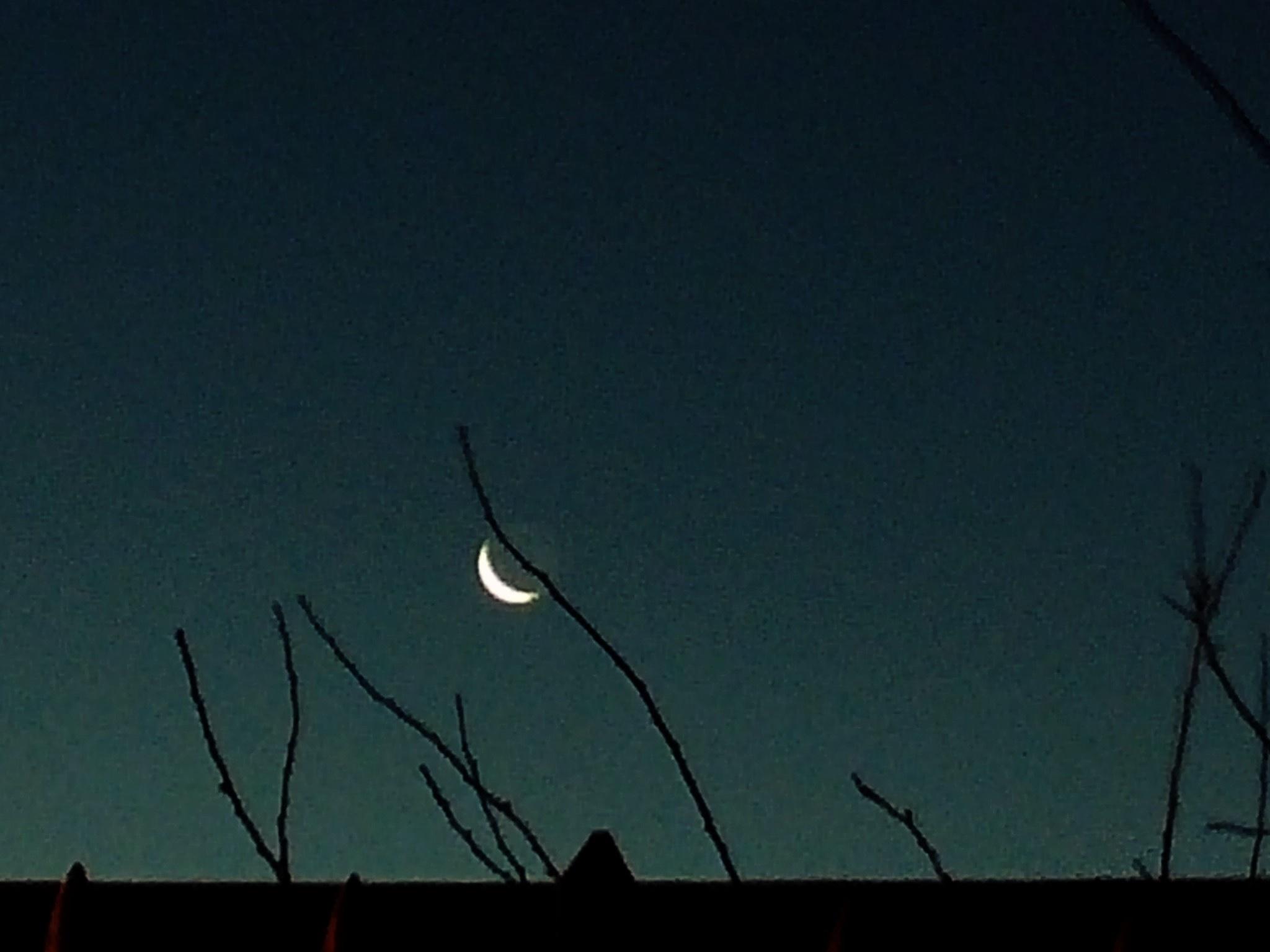 Moon by Abbie