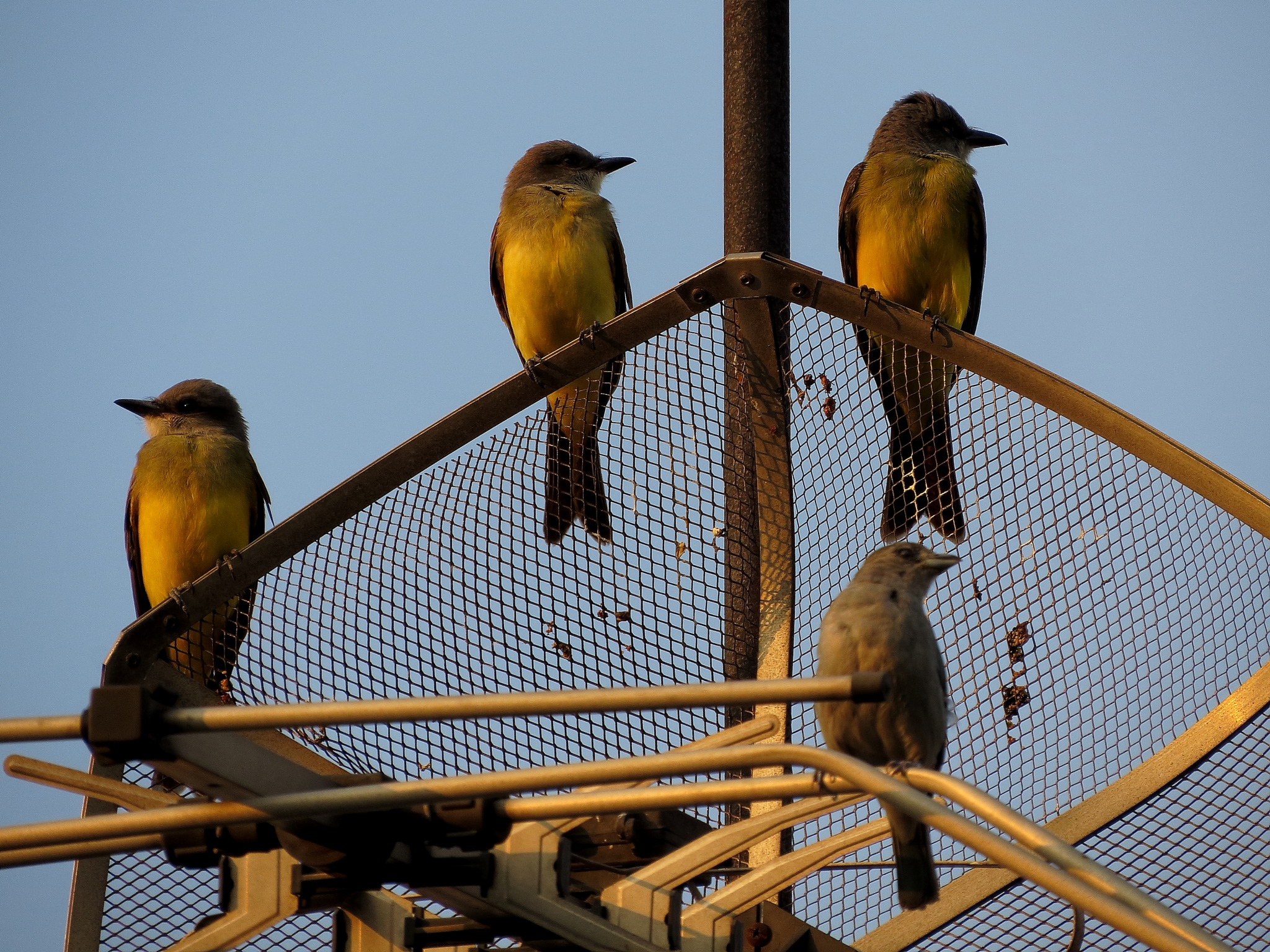 Birds by LuixCelso