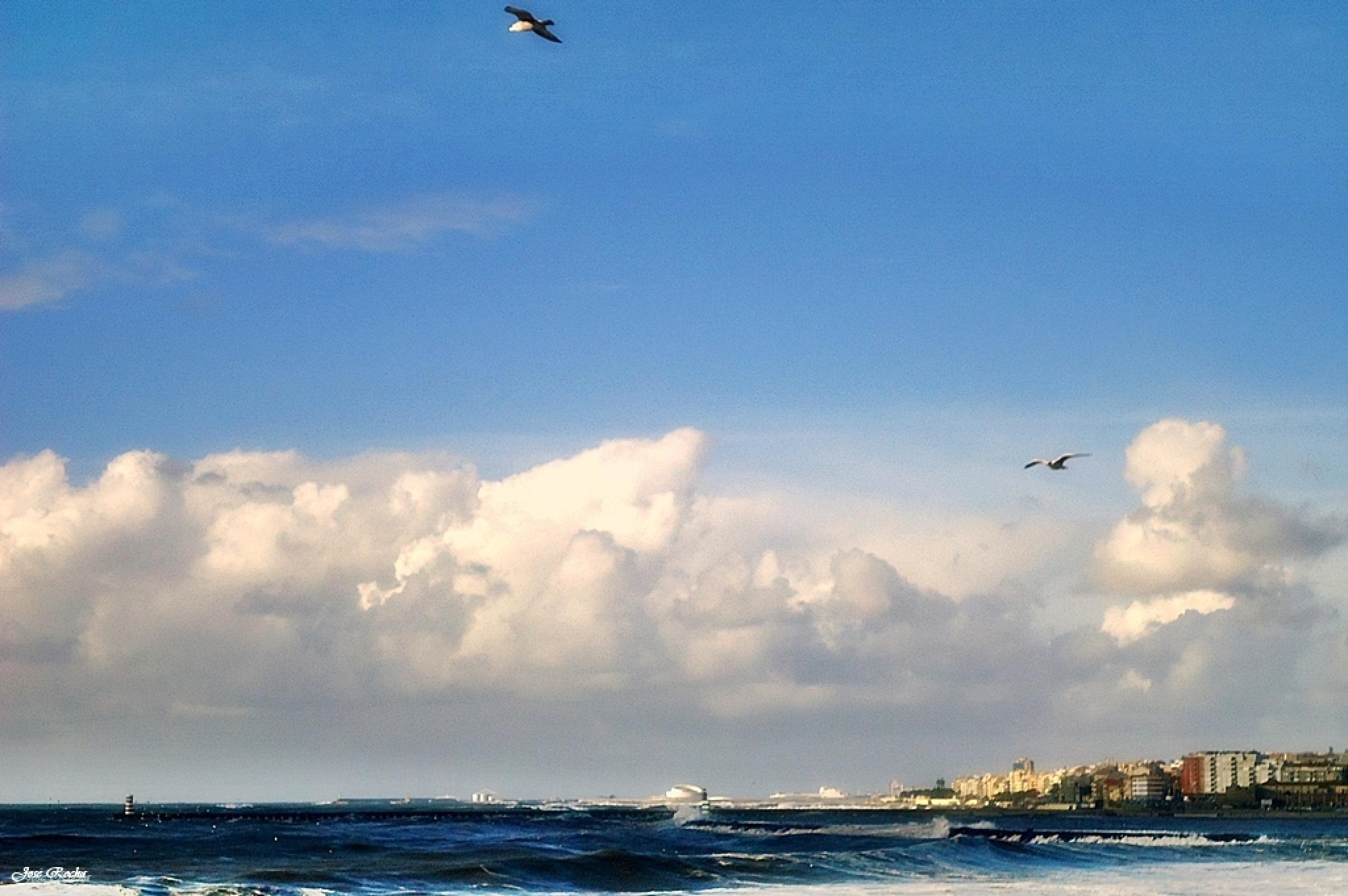 seagull flies away, flies so high ... by josé rocha photography