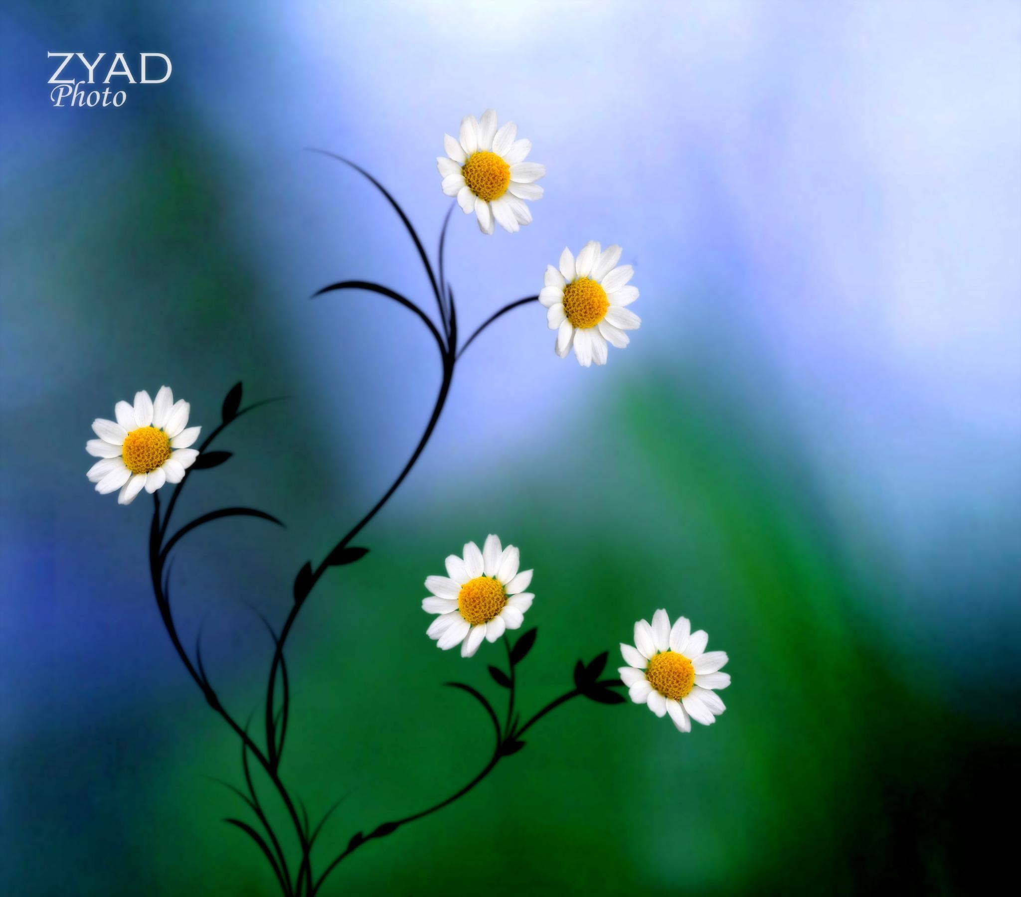Untitled by zyad_yassen