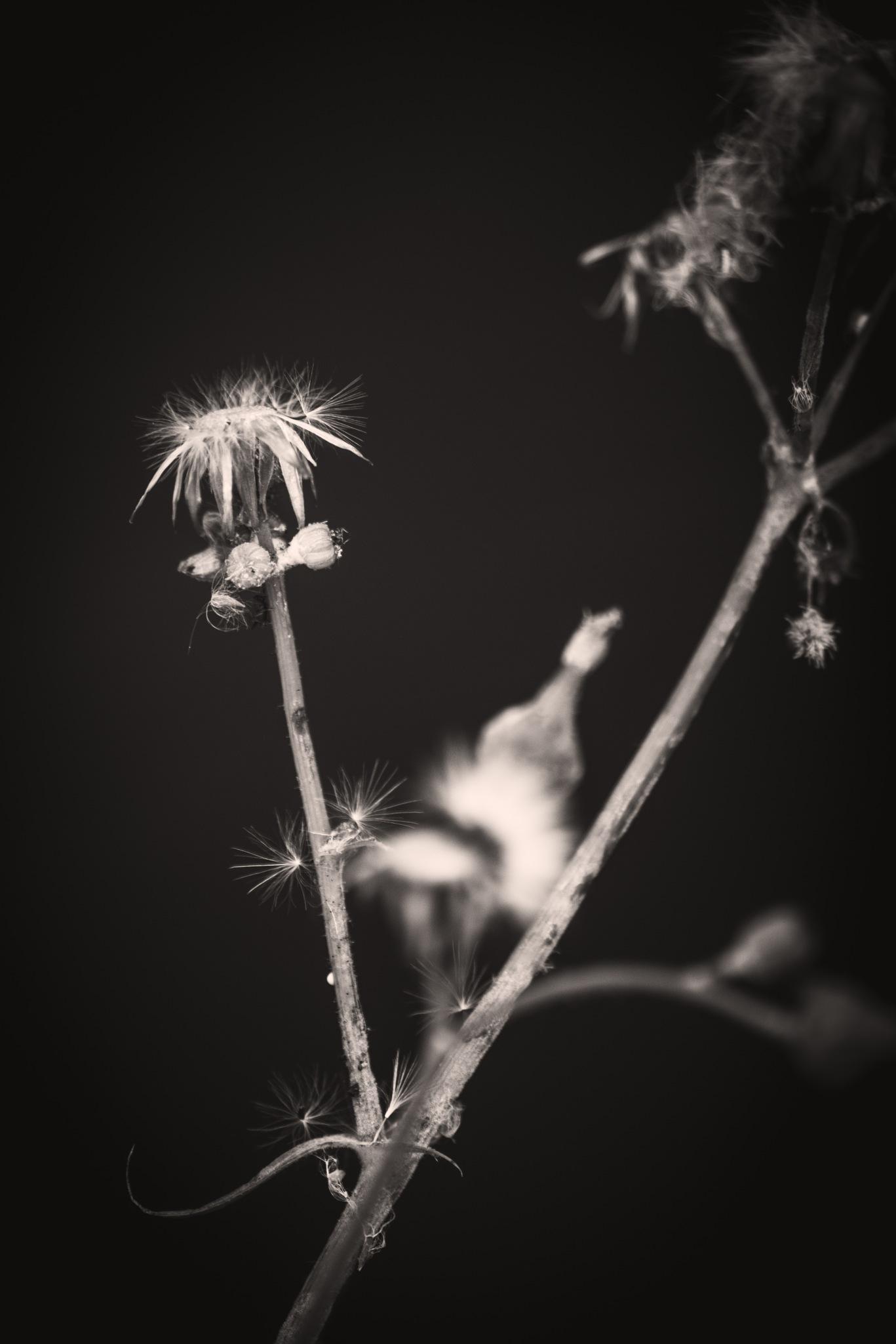 Botanical by Bethany Fletcher
