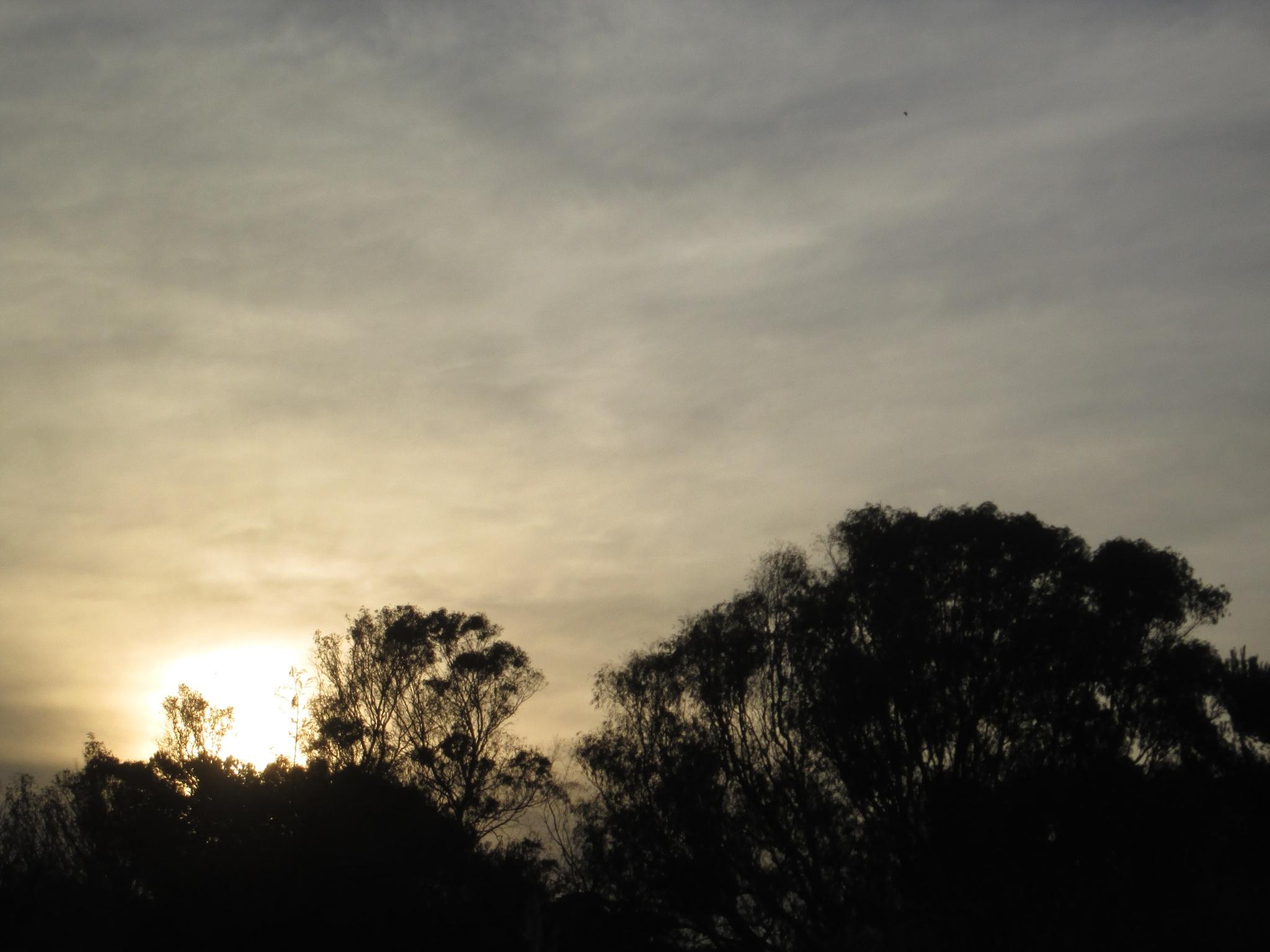 Evening by michaelwrescz