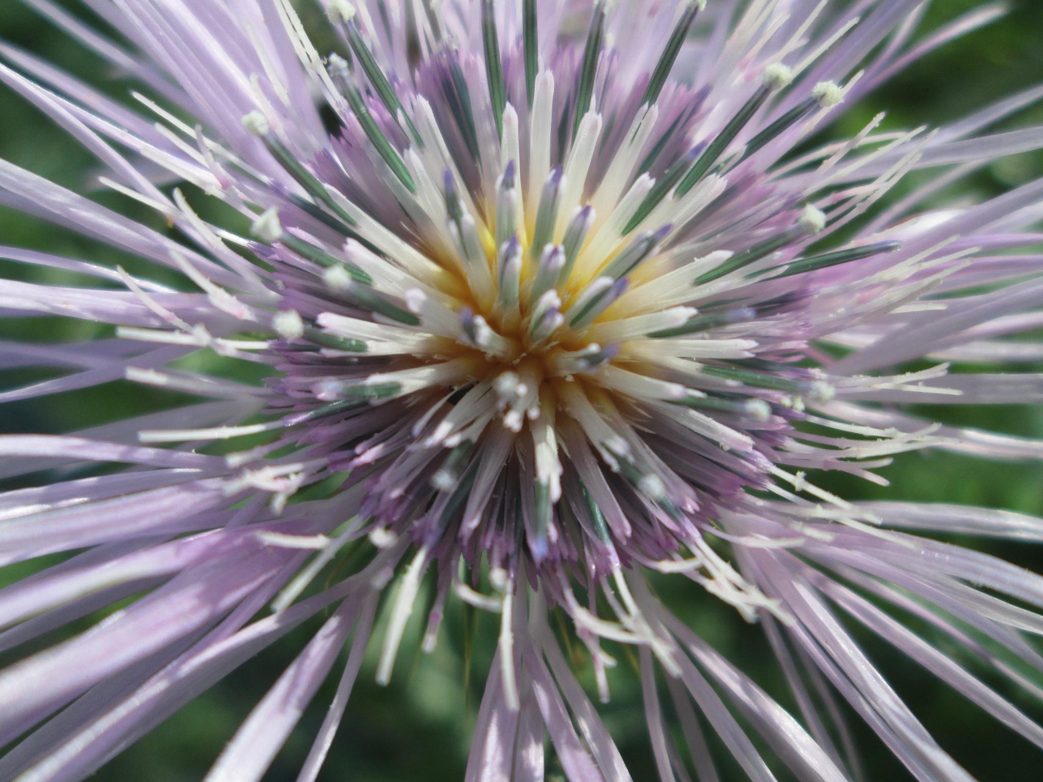 Wild Flower by michaelwrescz