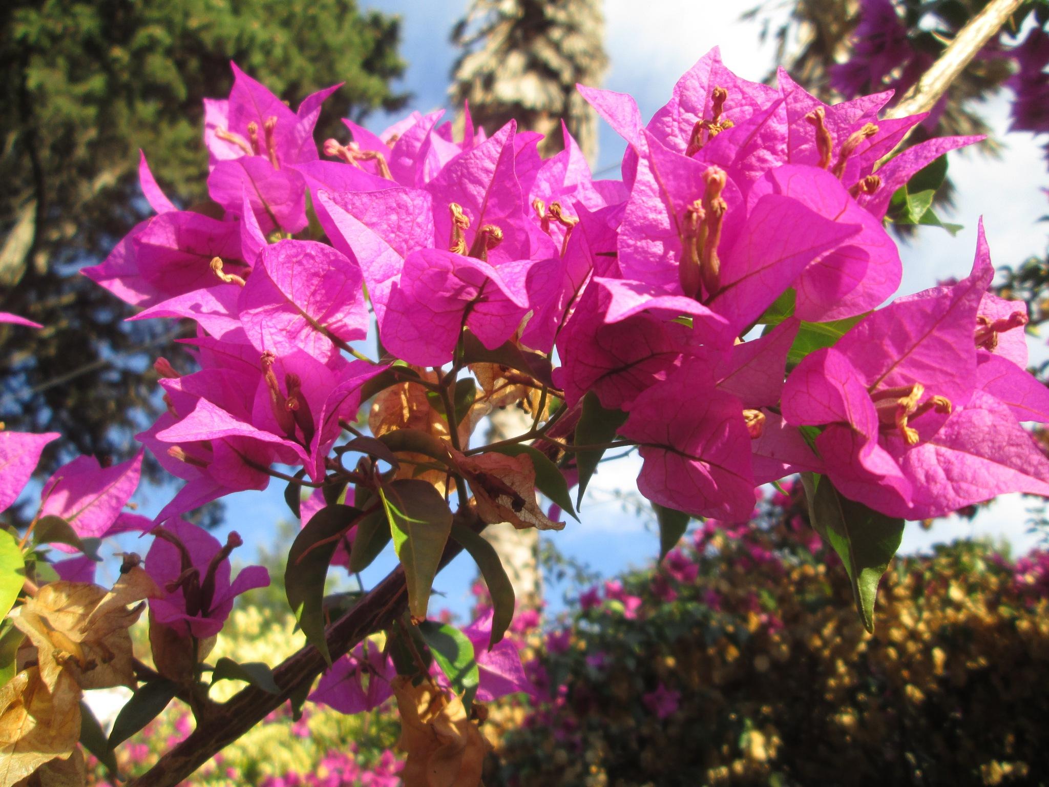 Pretty in pink by michaelwrescz