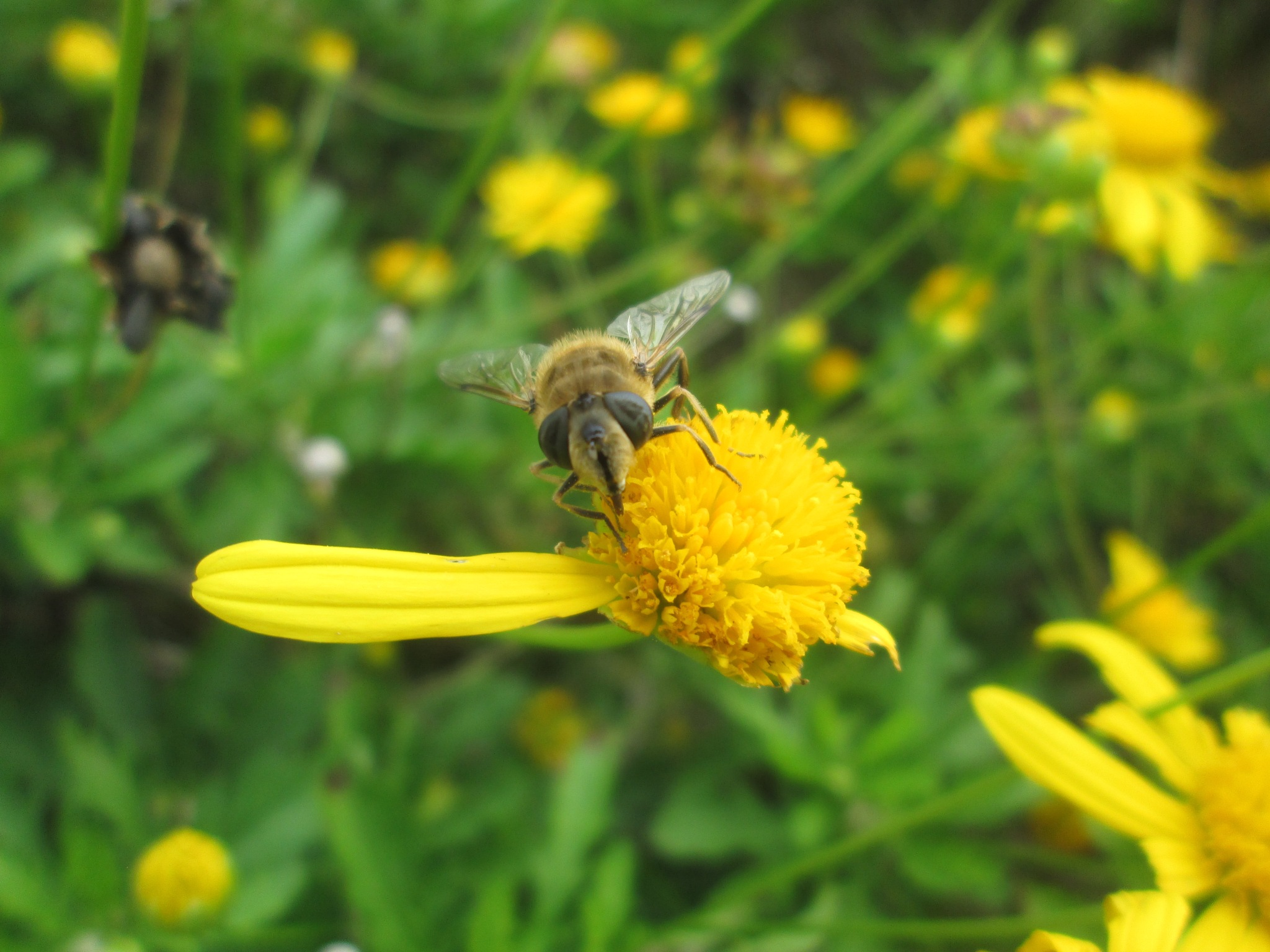 Bee by michaelwrescz