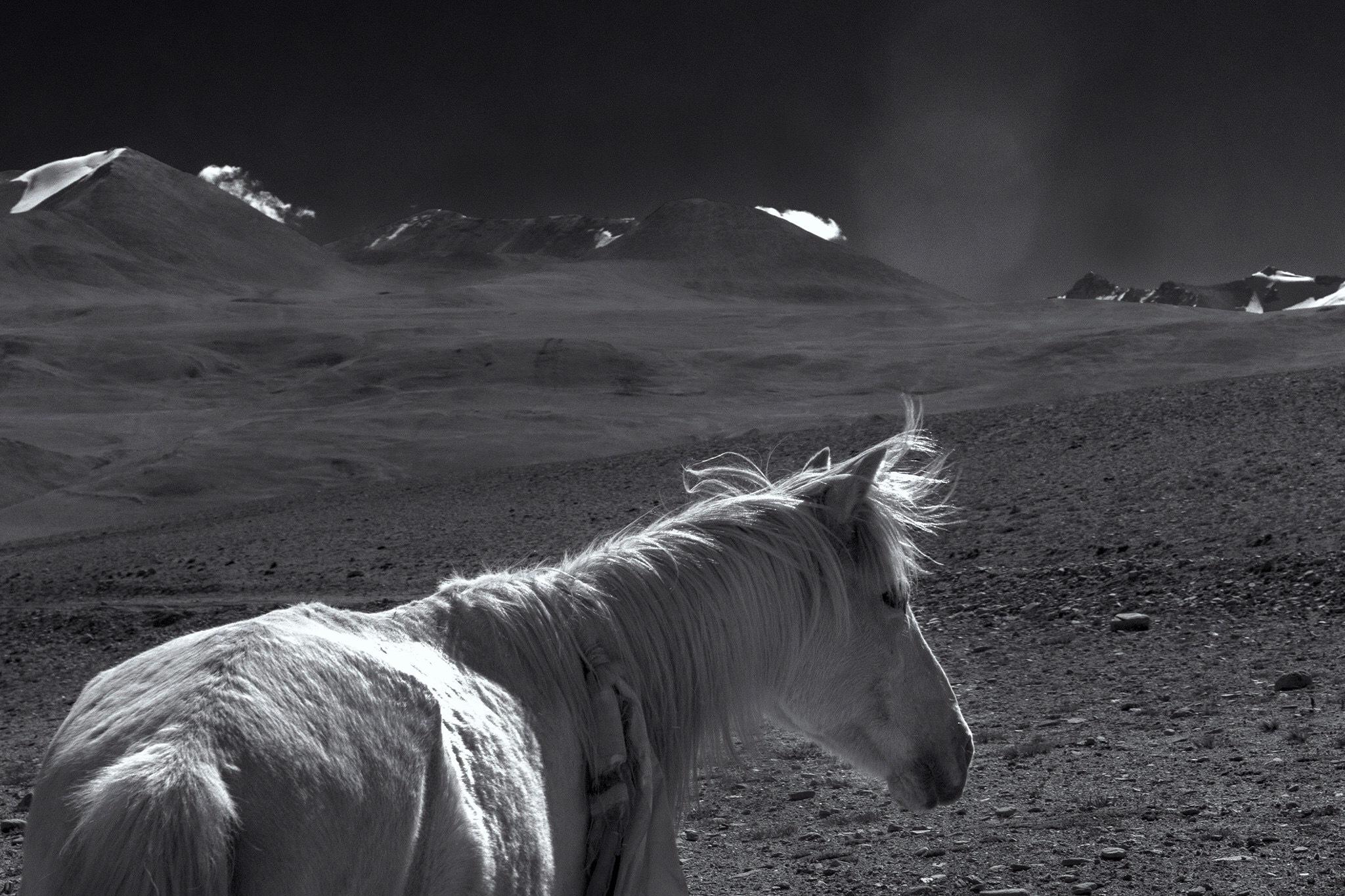 Horse  by indigoroy
