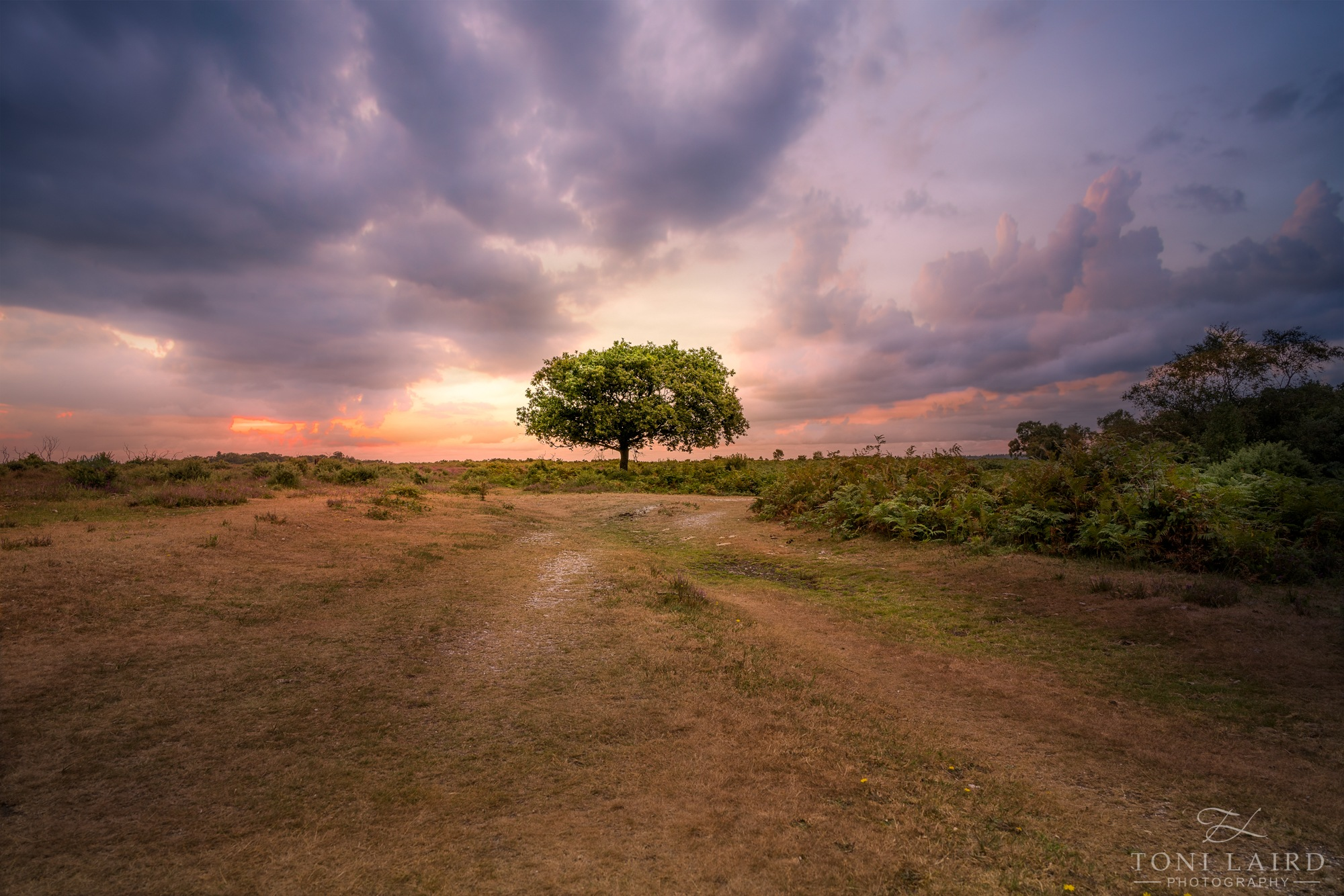 The Lone Tree by Toni Laird