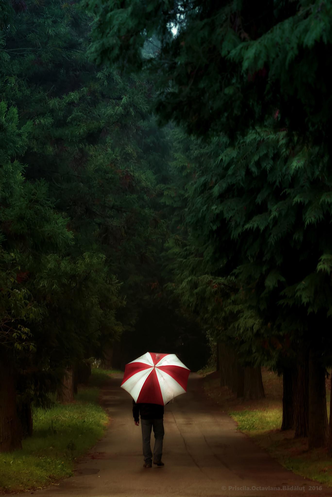 into the woods by Priscila Octaviana Bădăluț