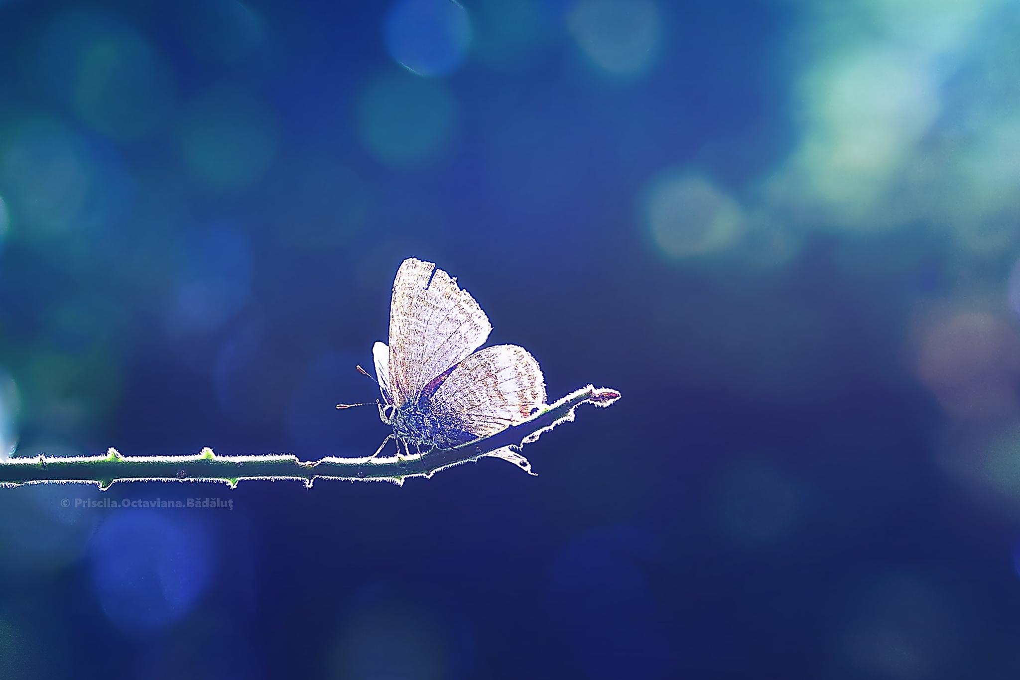 blue dreams by Priscila Octaviana Bădăluț