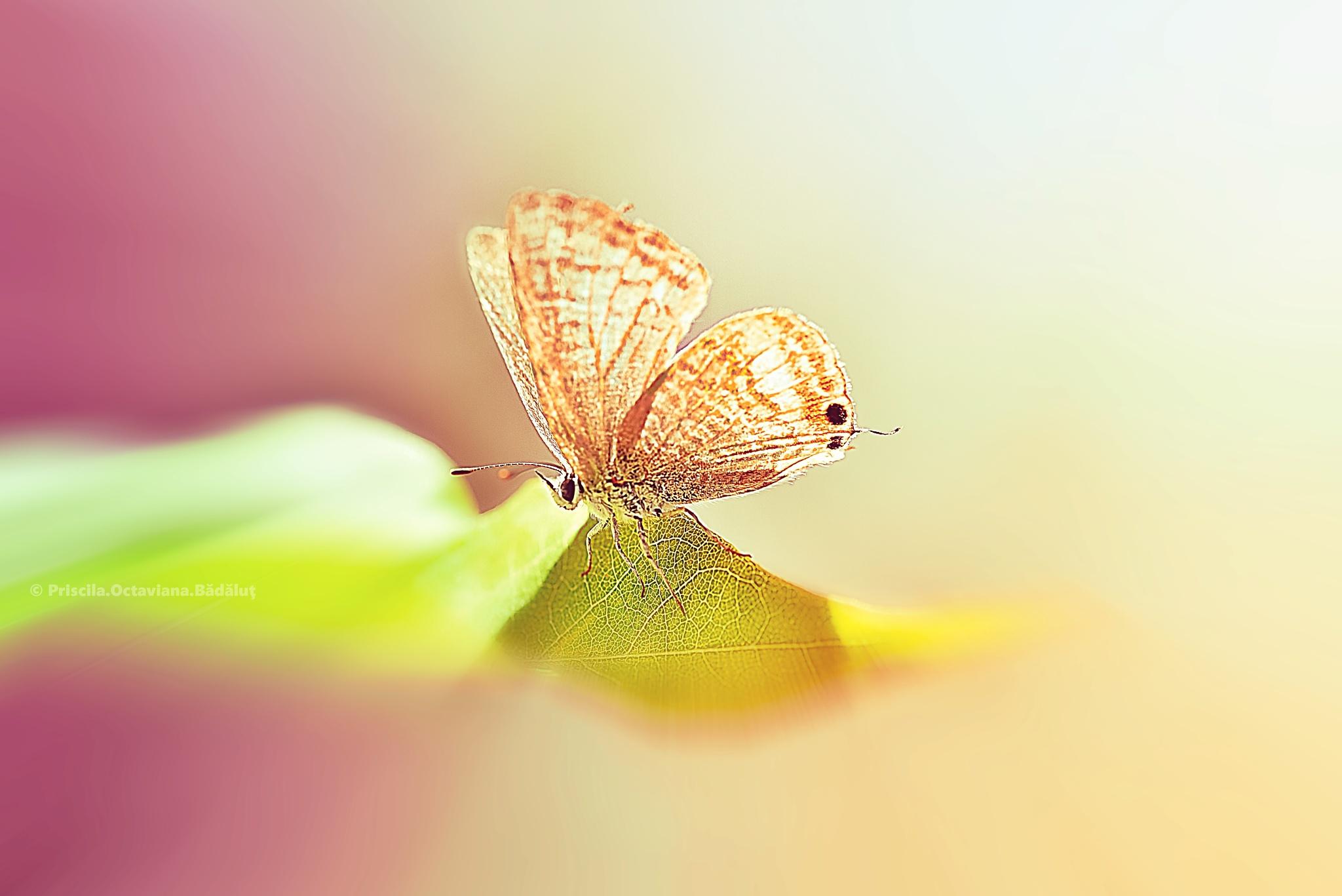 Madama Butterfly by Priscila Octaviana Bădăluț