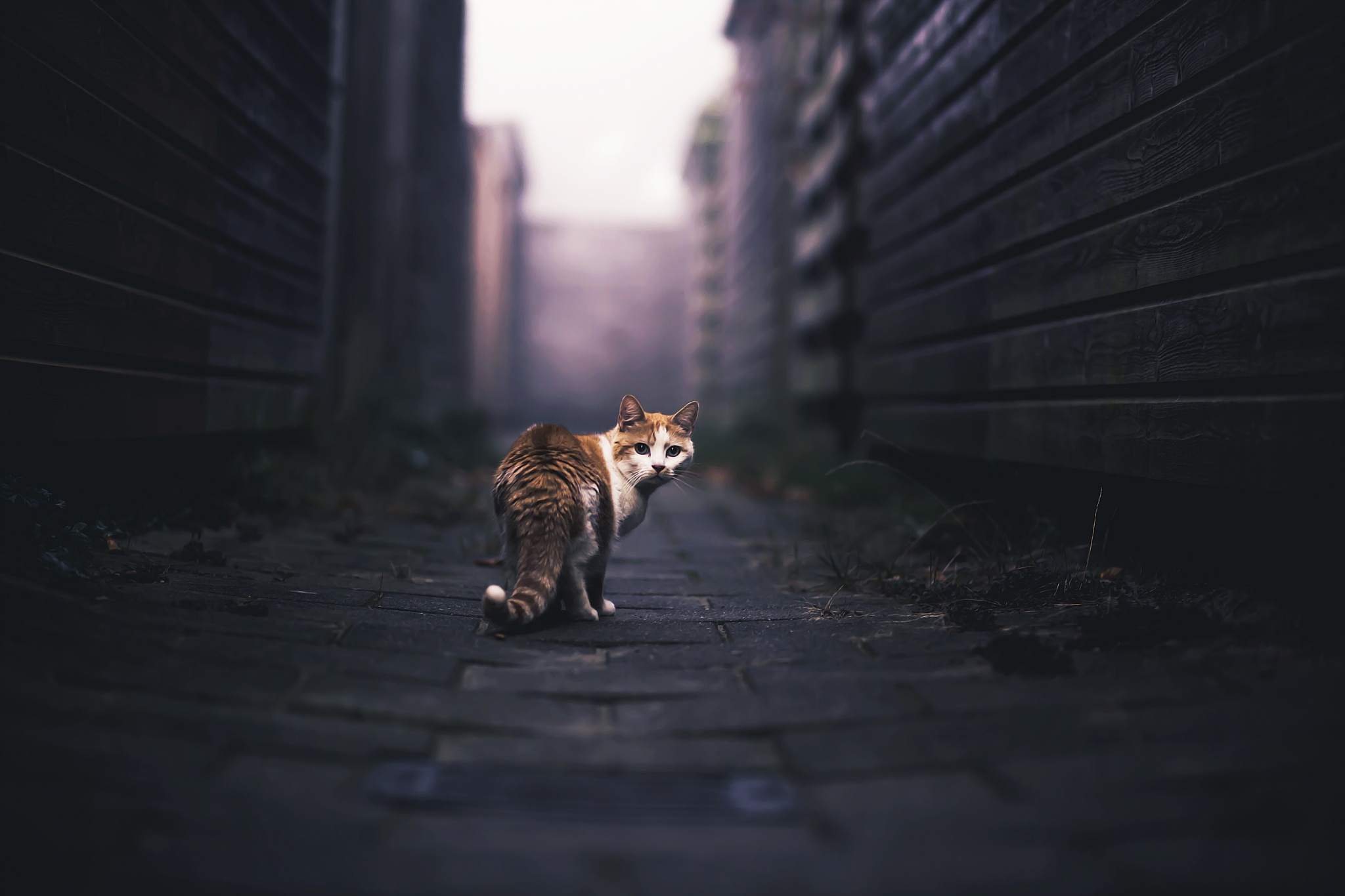Foggy Alley by FelicityBerkleef