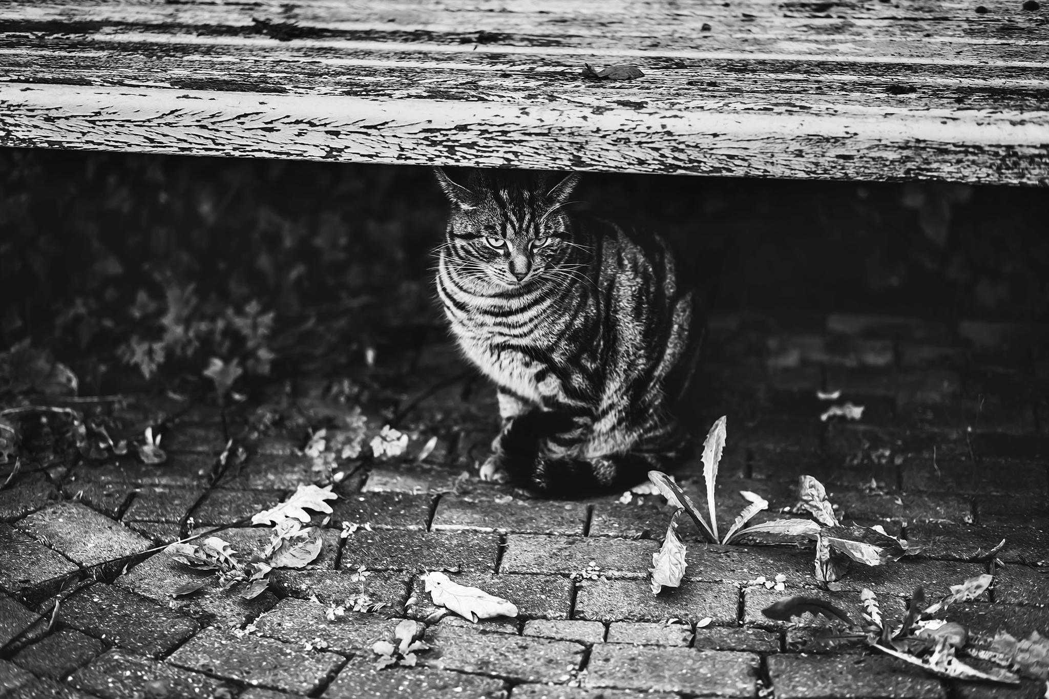 Hide by FelicityBerkleef