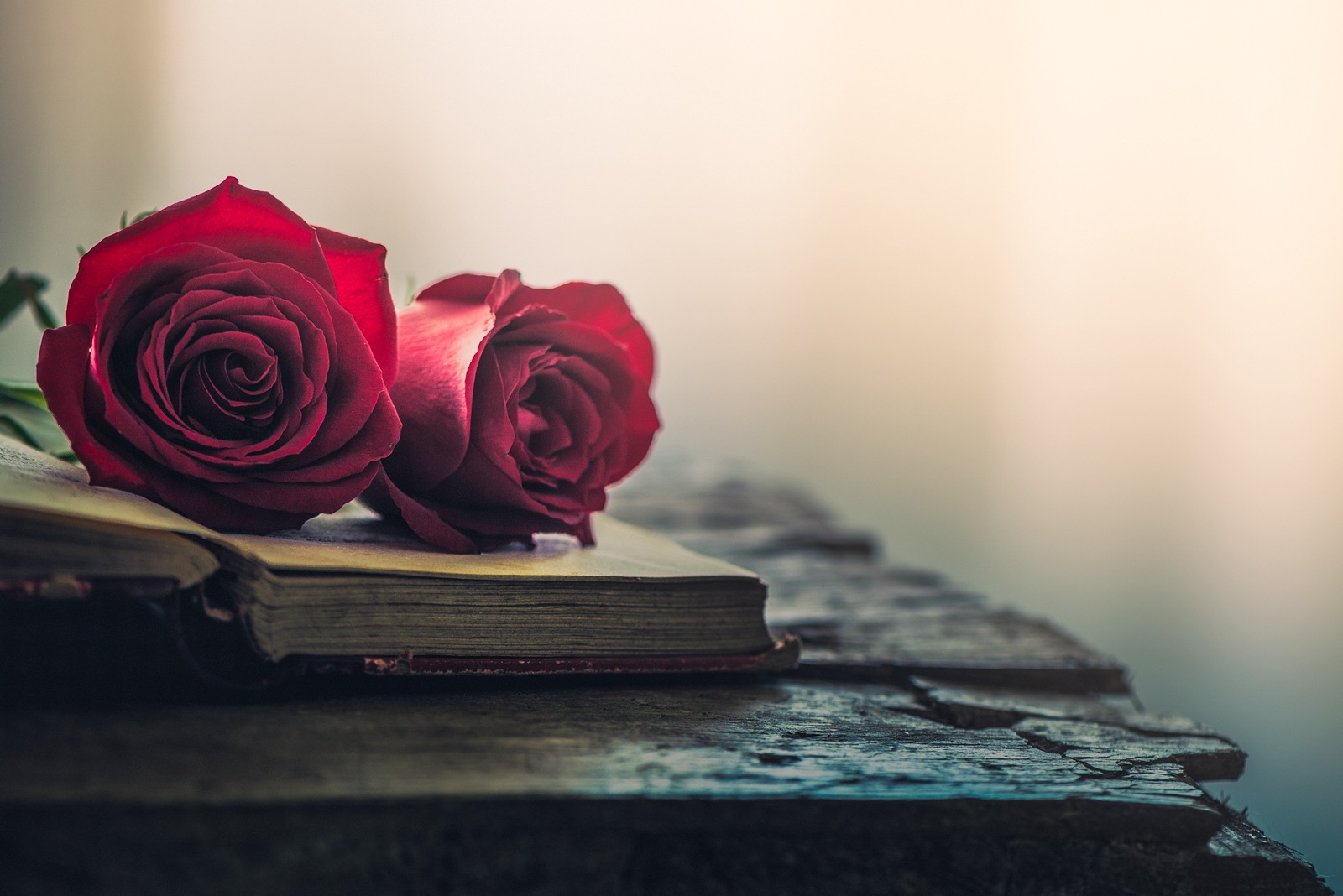 Two roses by Rosana