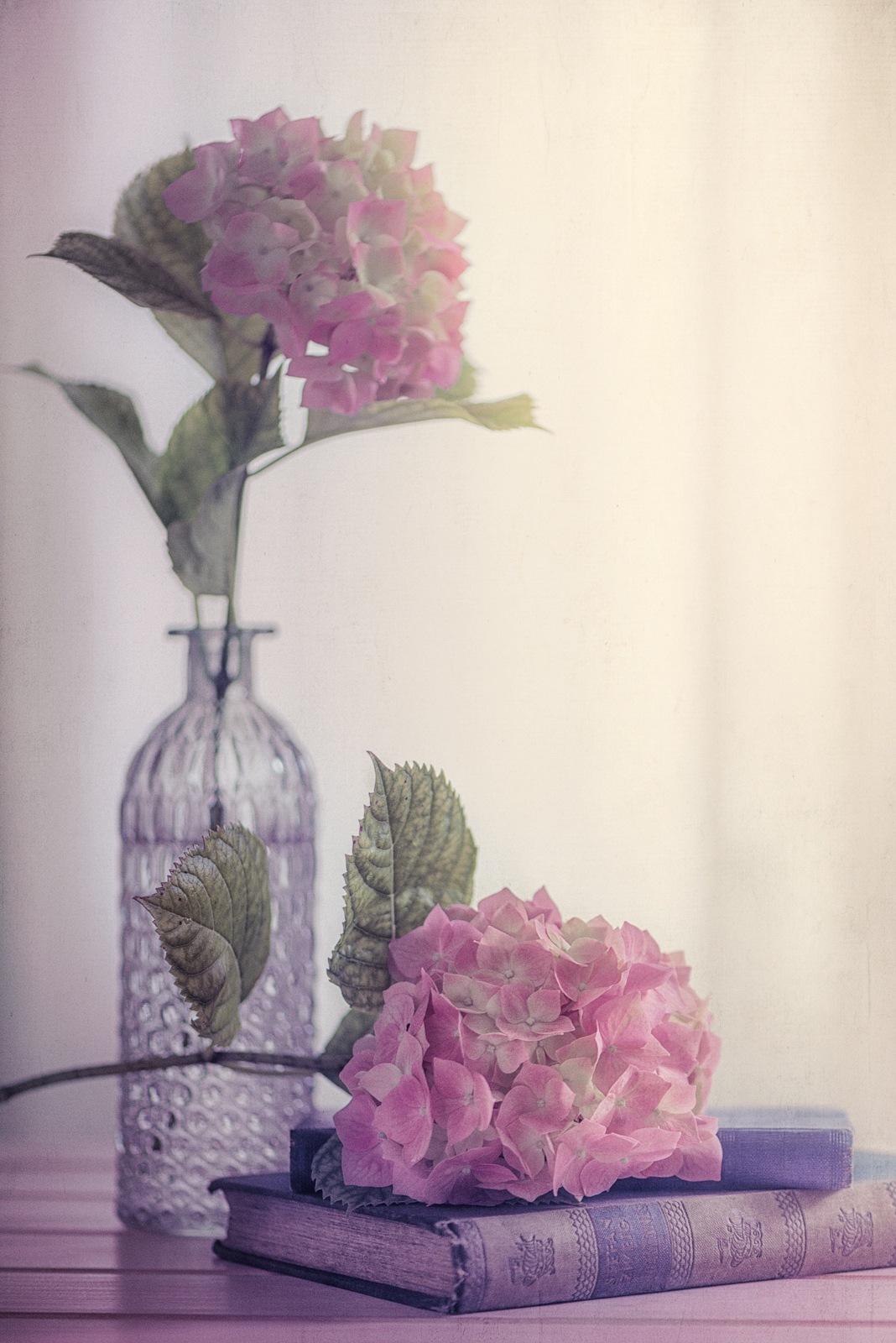 Hydrangea time by Rosana