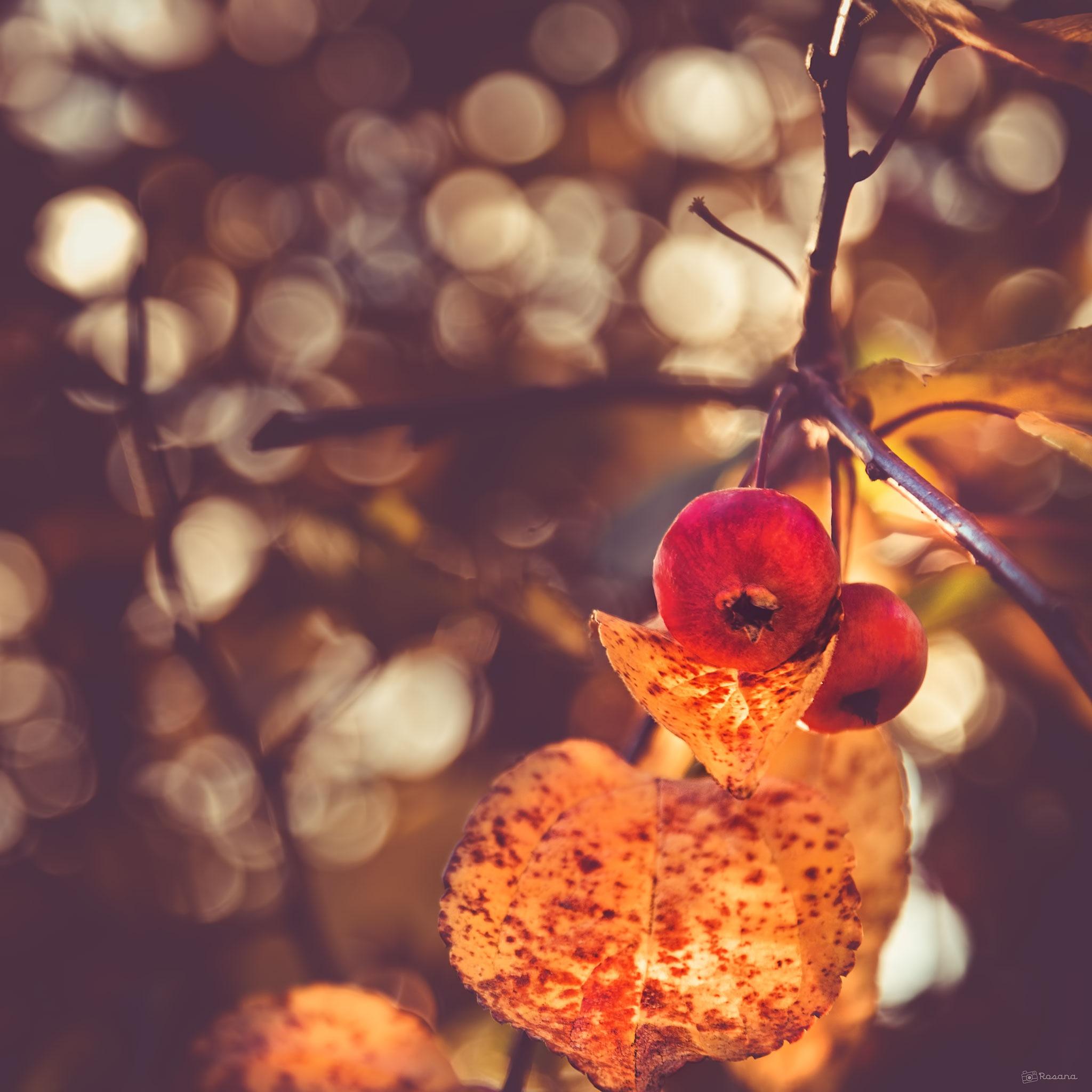 Autumn bokeh by Rosana